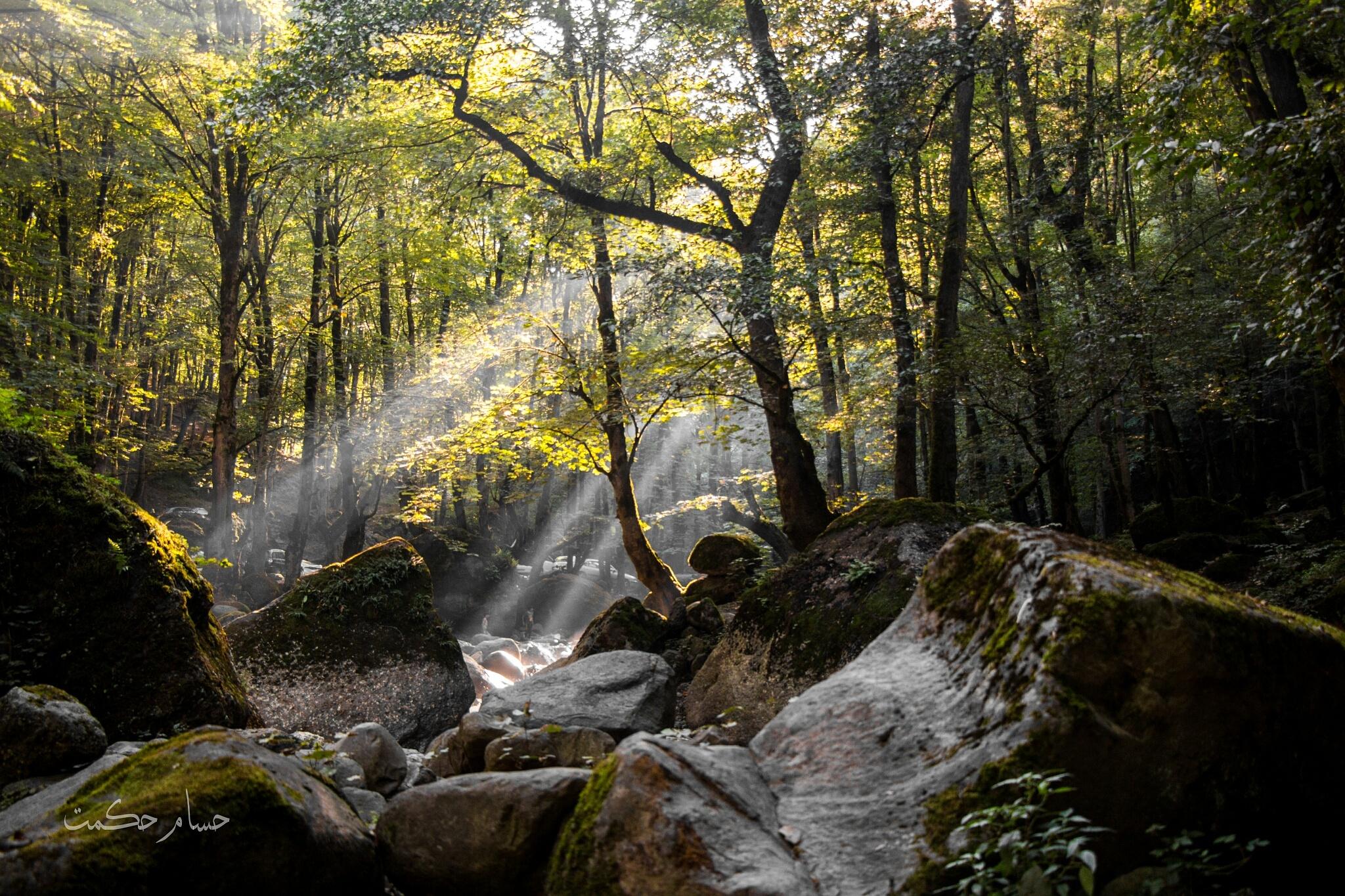 Magic Forest kelardasht by Husam Hikmat