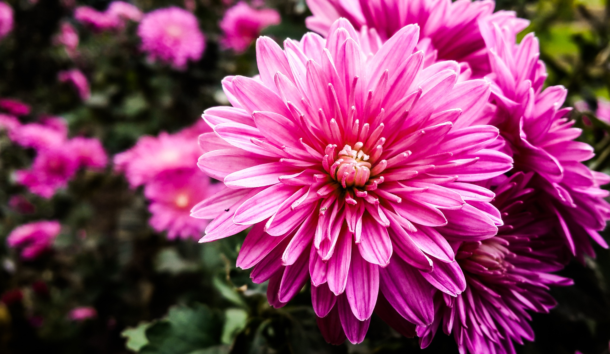 Flowers of my by Husam Hikmat