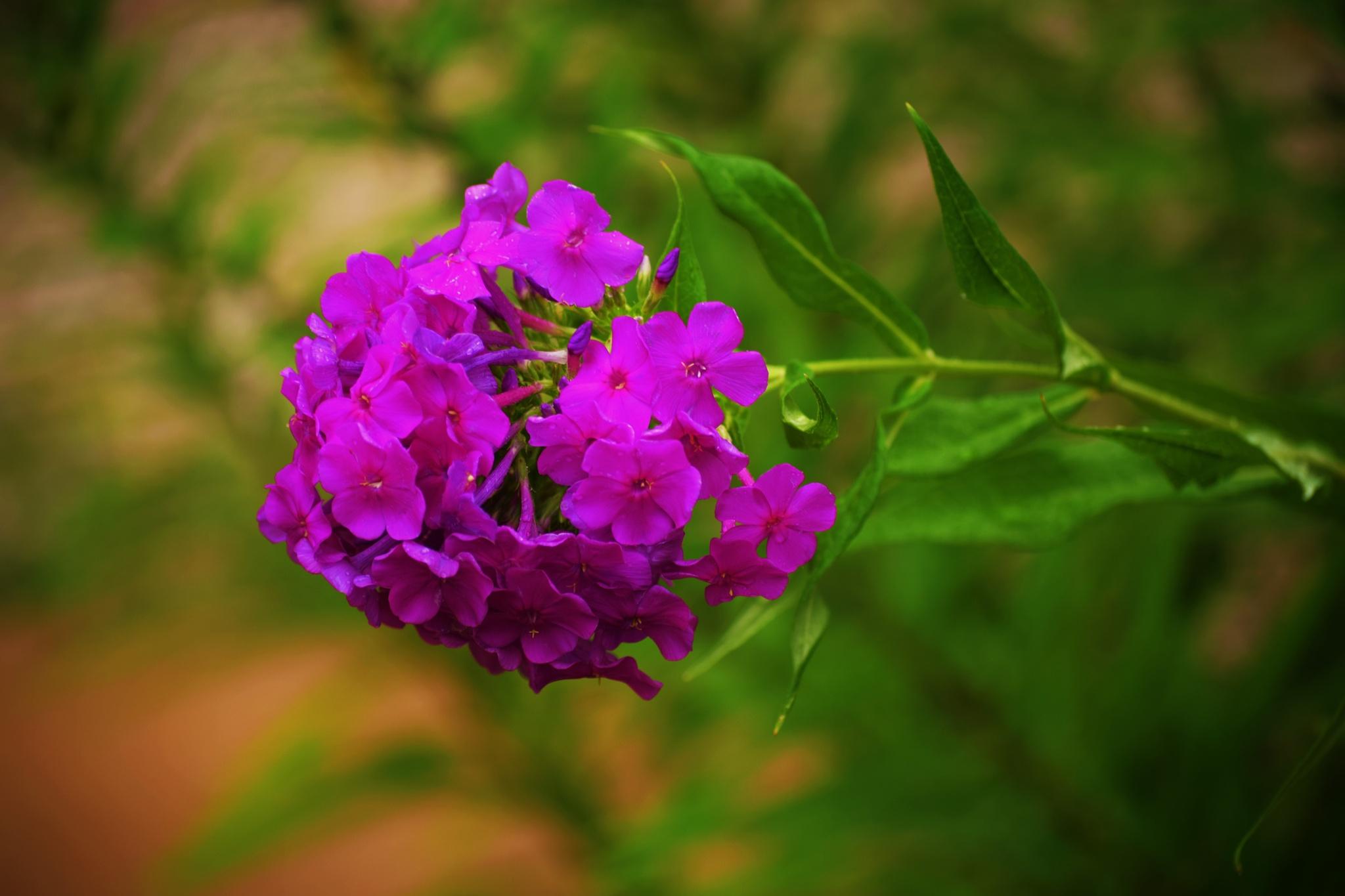 Flower  by Cheryl Noack Photography