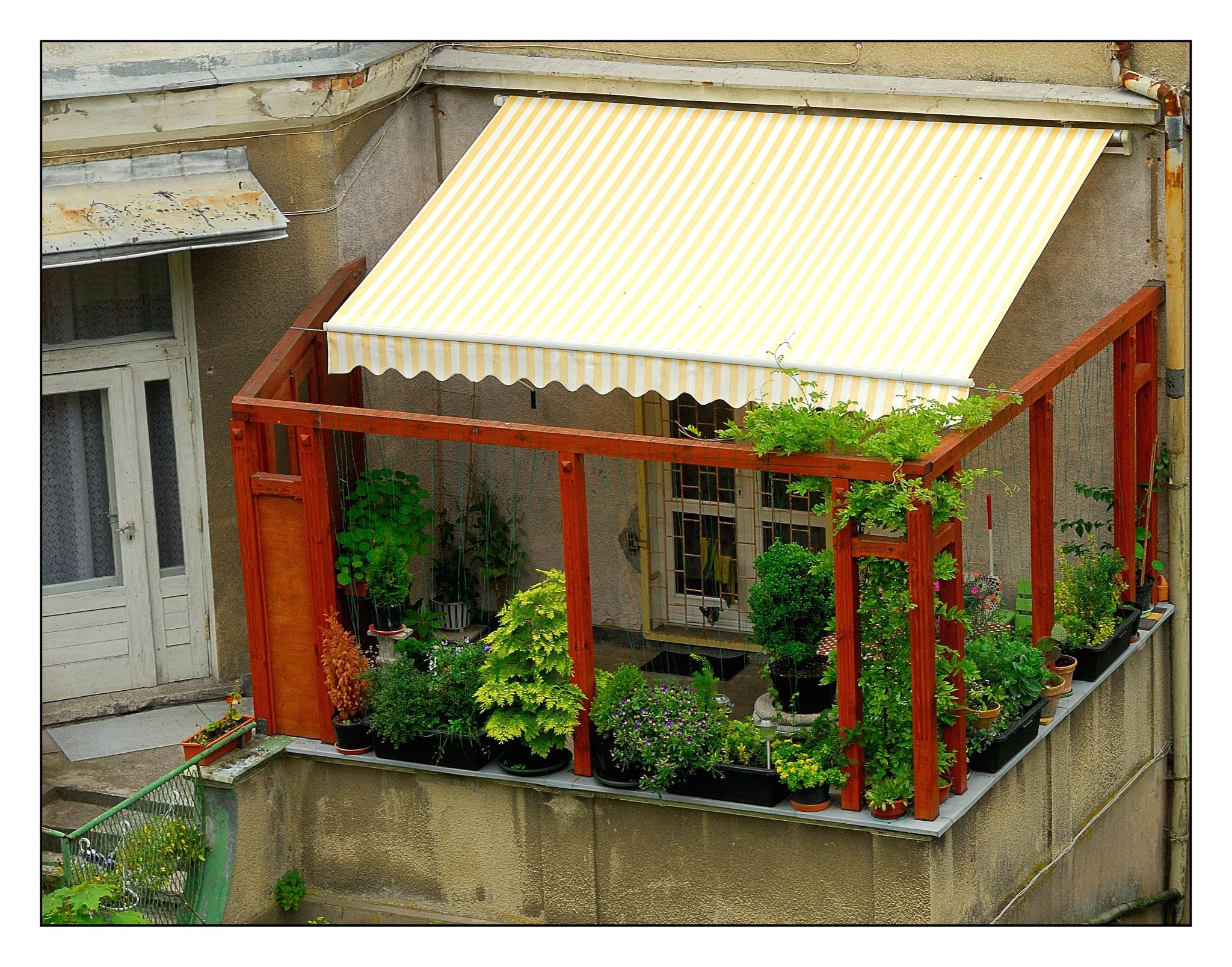 A little private garden by karlbertil
