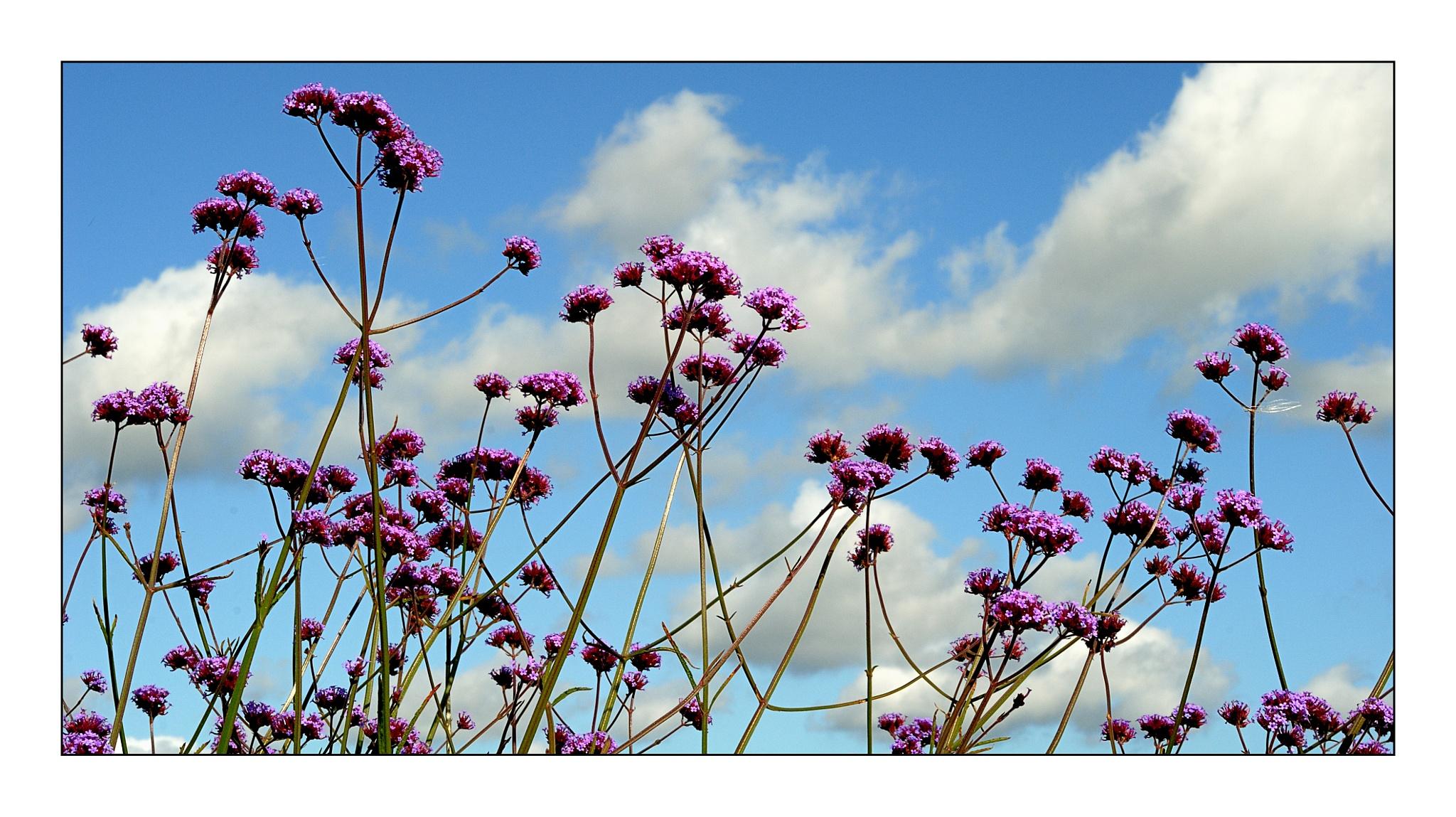 Flowers by karlbertil