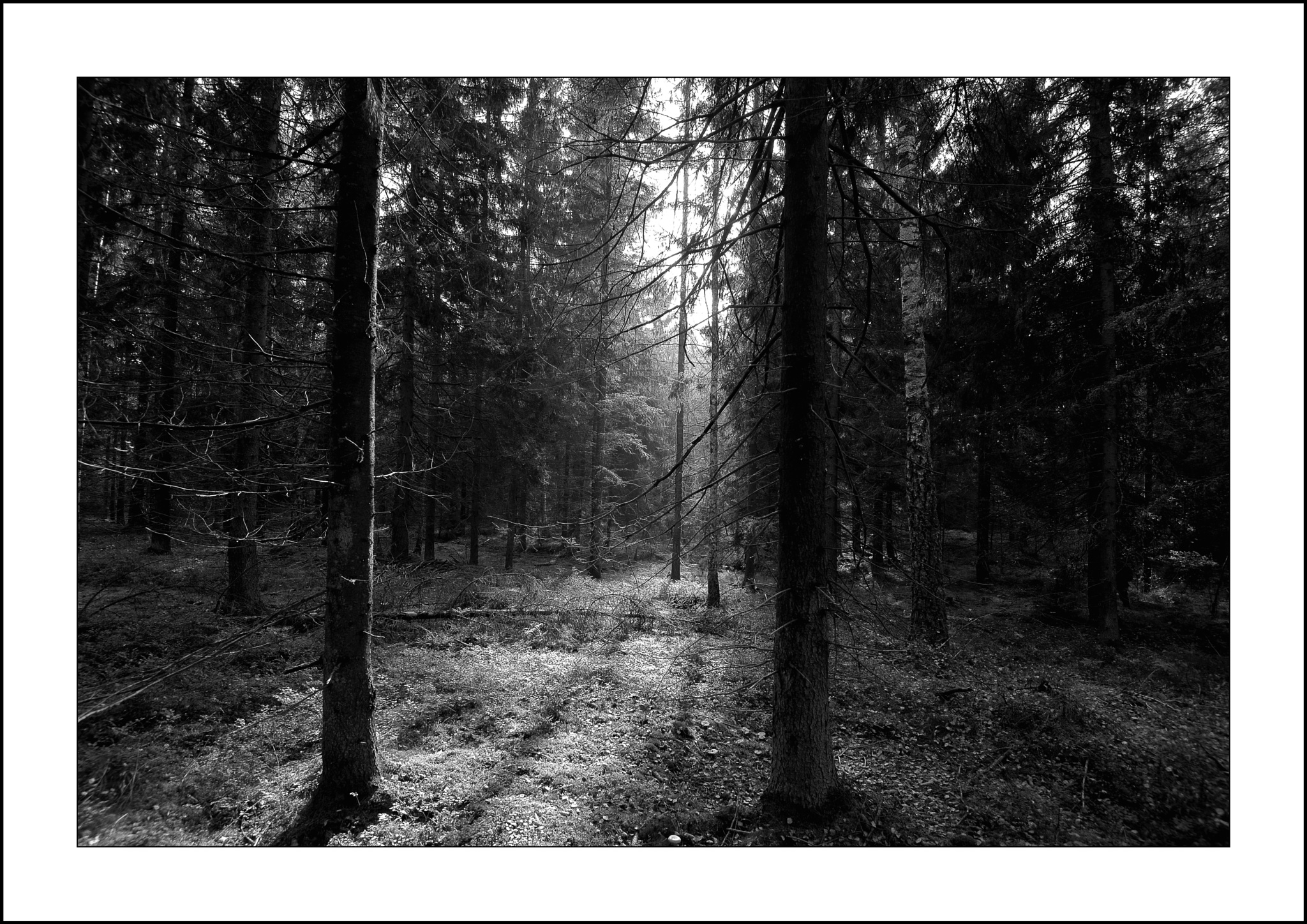 In the forest by karlbertil