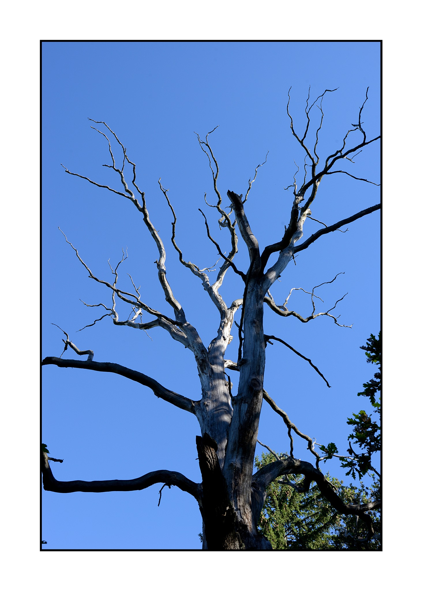 Tree by karlbertil