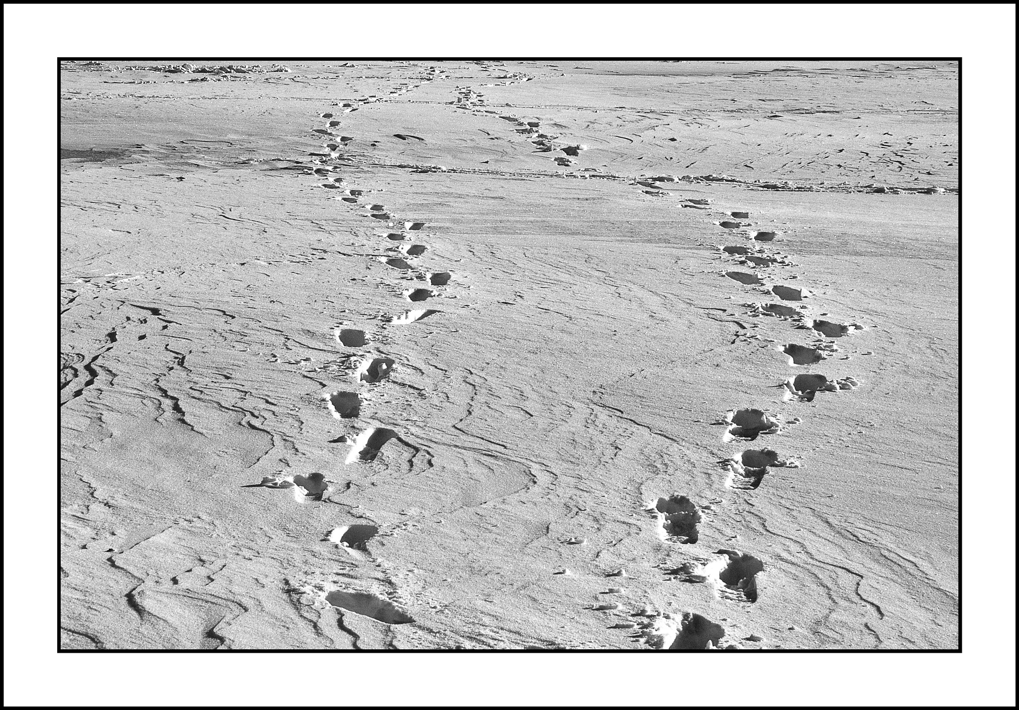 Traces in the snow by karlbertil