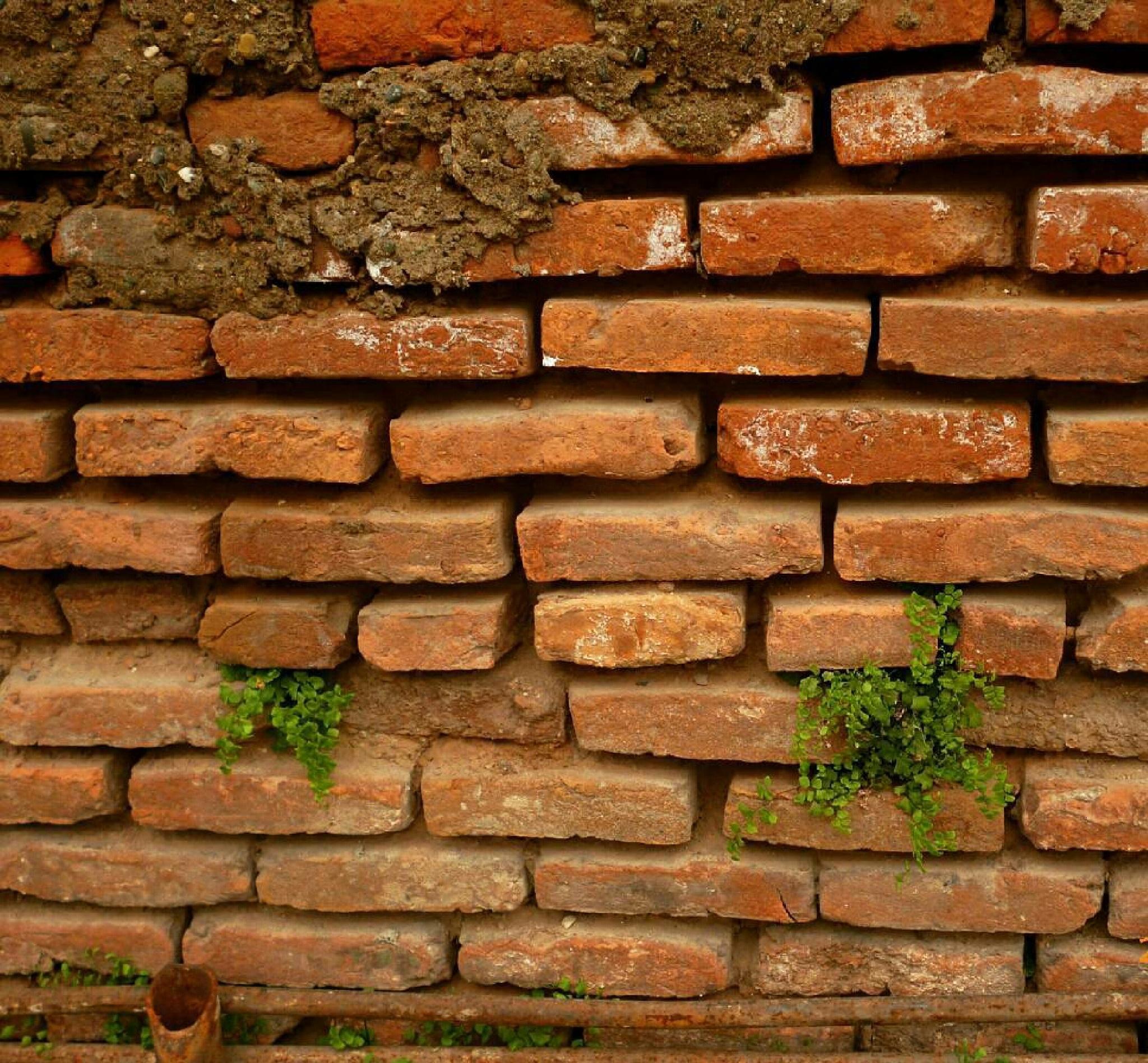 brick wall by Fateme.hp