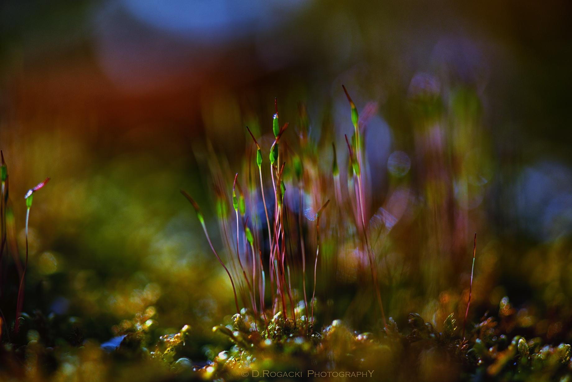 Photo in Macro #macro #last #nature