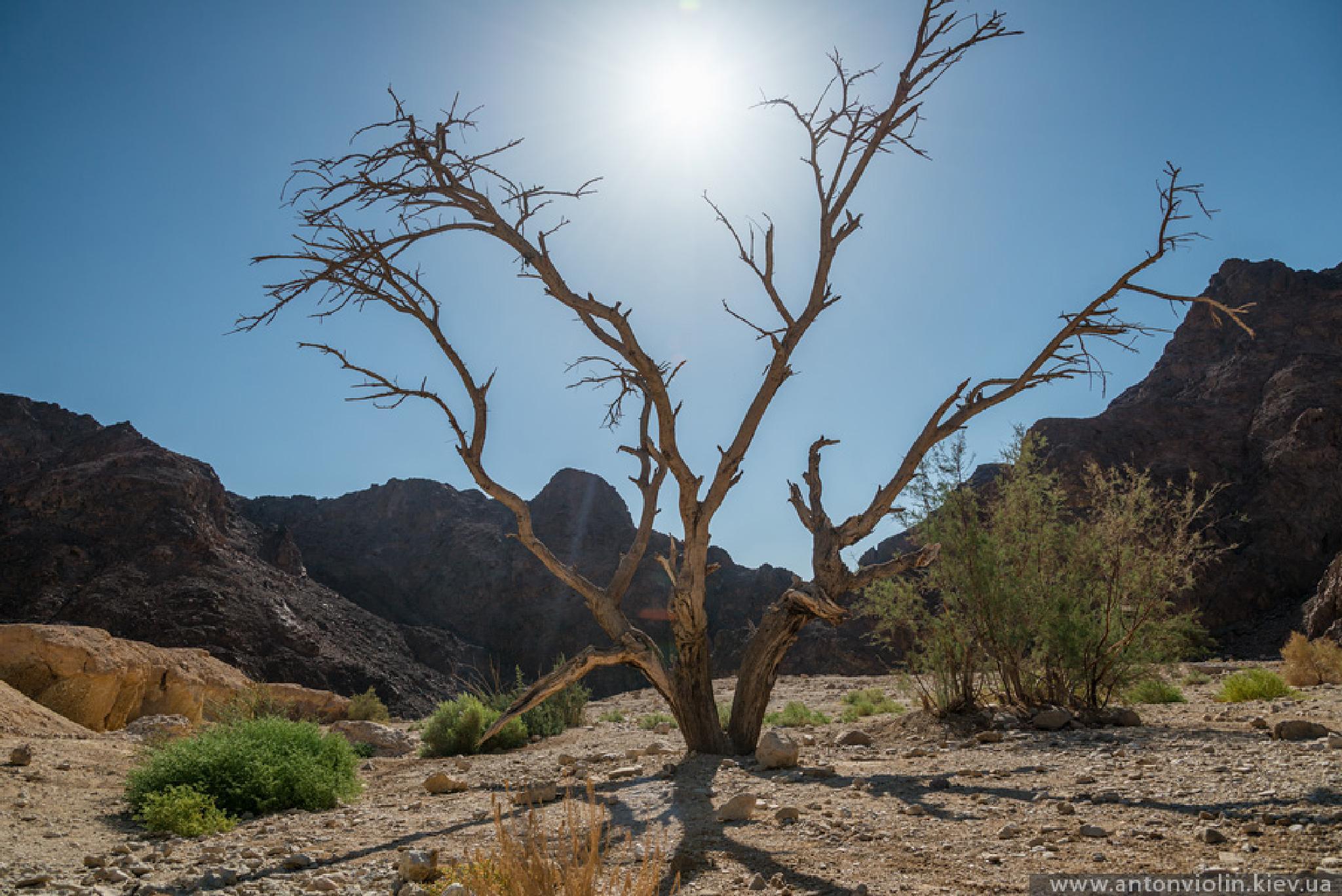 Under hot sun by Anton Violin