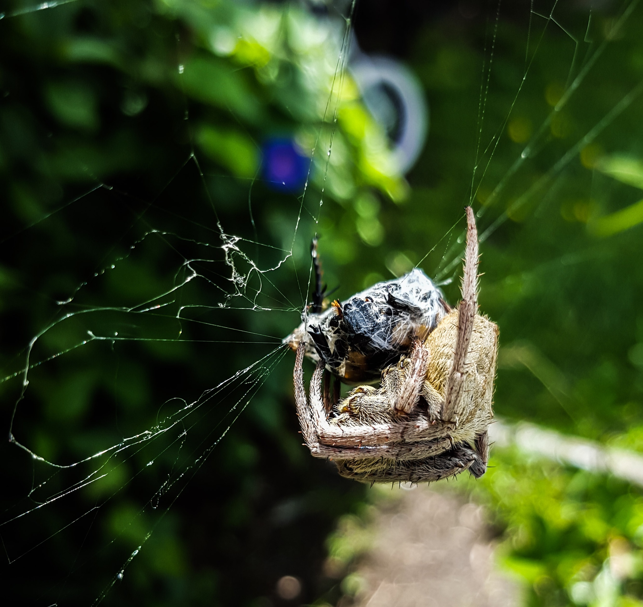 spider suffacating its prey  (i think) by Amyelle J
