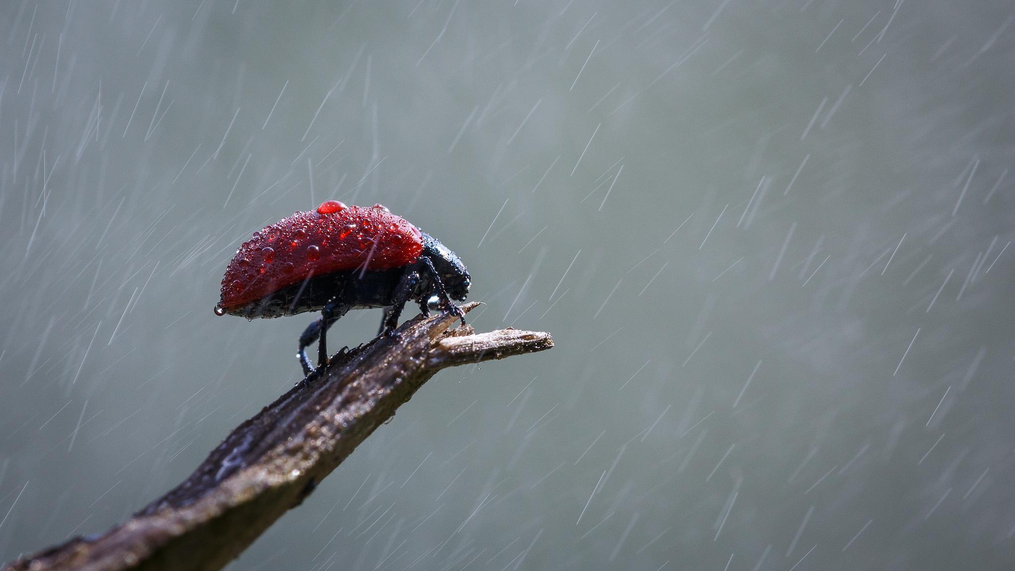 The naked ladybug by Andrea Martinez
