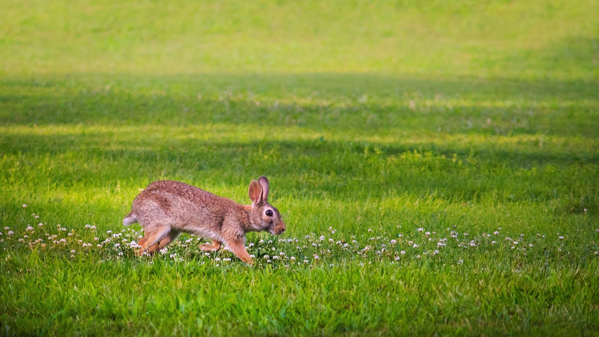 Bunny by Andrea Martinez