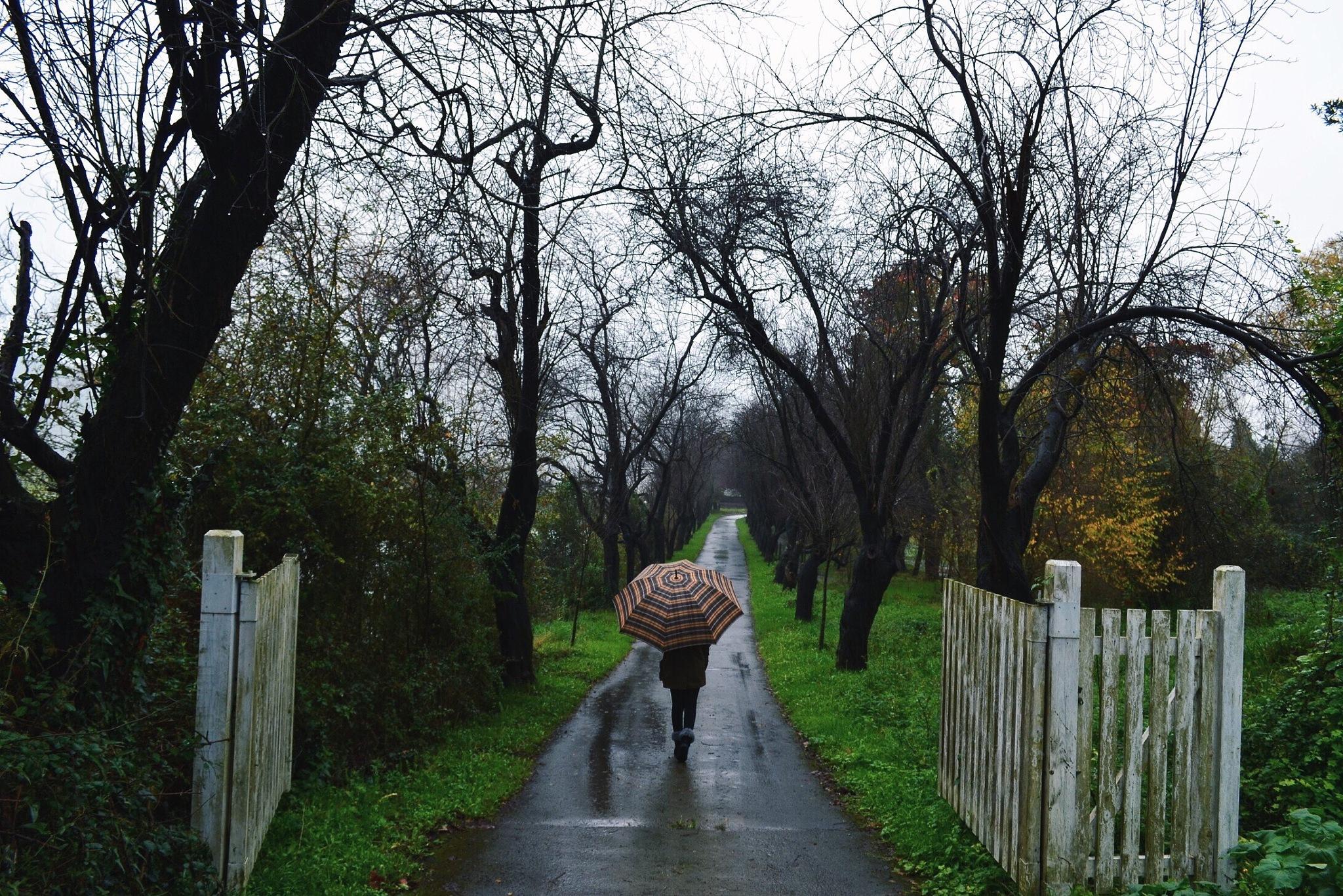 Rainy day by ElementsP
