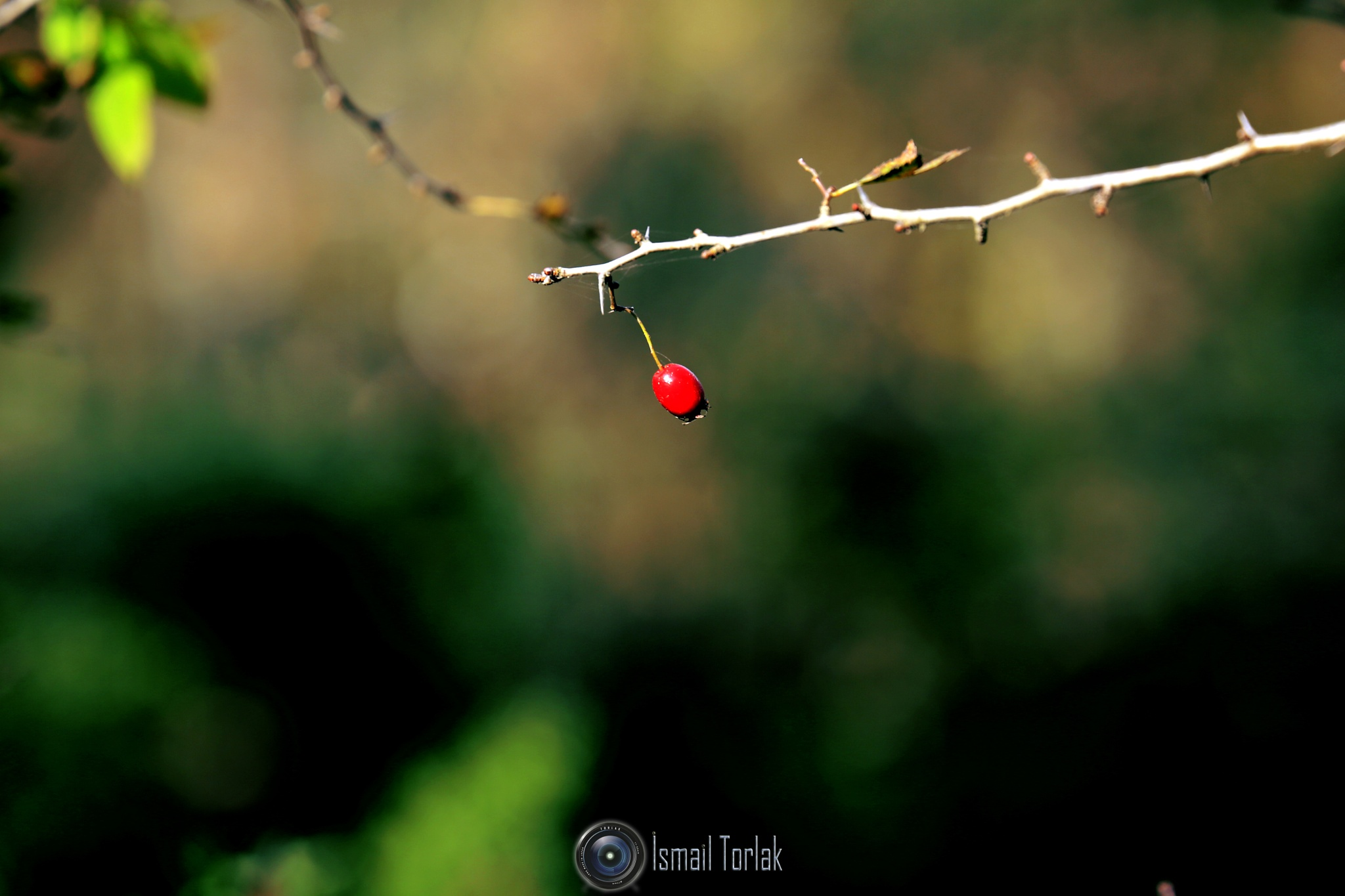 SONBAHAR.. by TORLAK