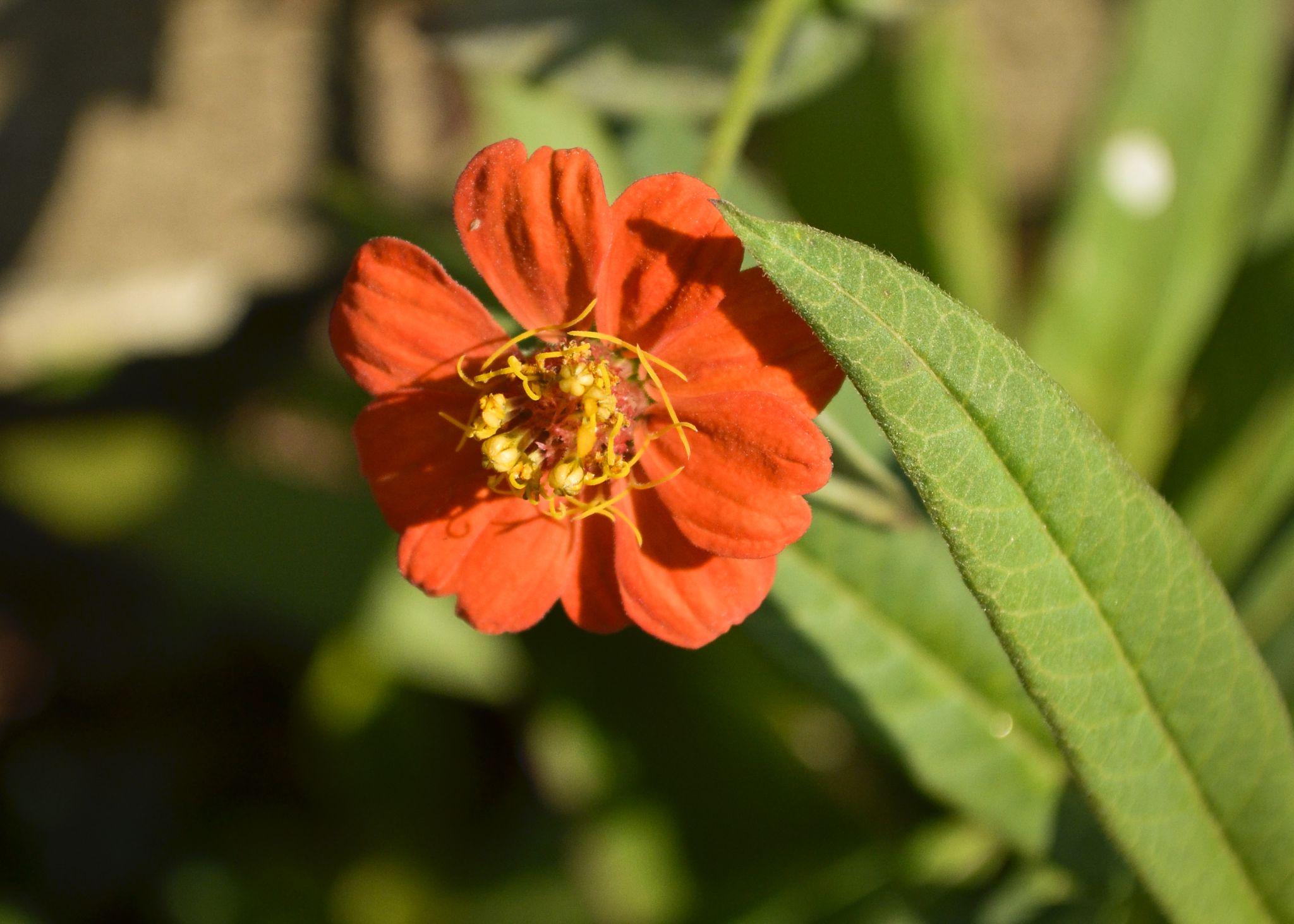 Bela flor by Wilson Silva