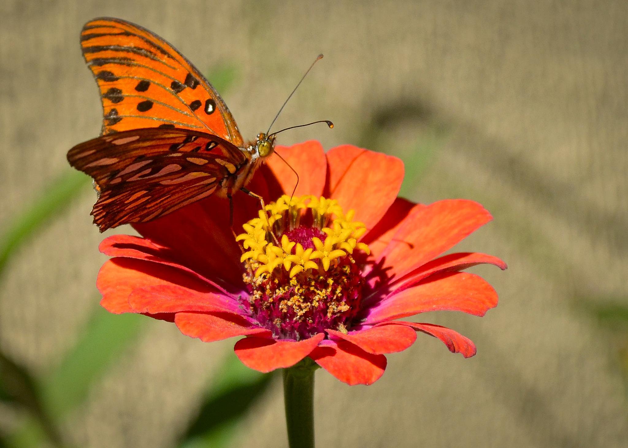 Belezas da natureza 2 by Wilson Silva