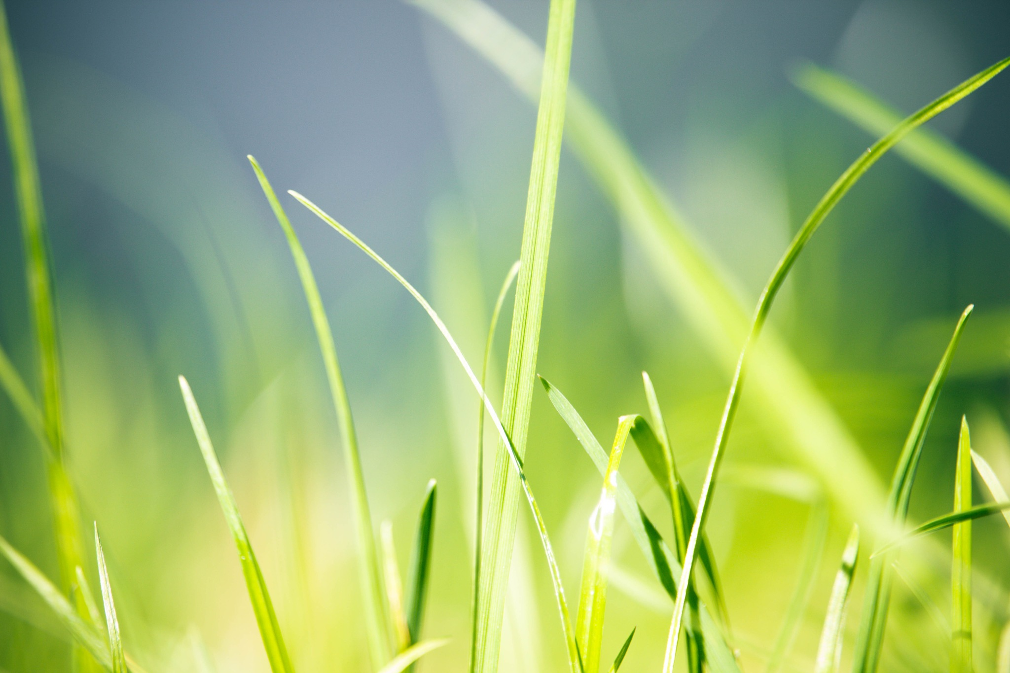 Grass by alexerne
