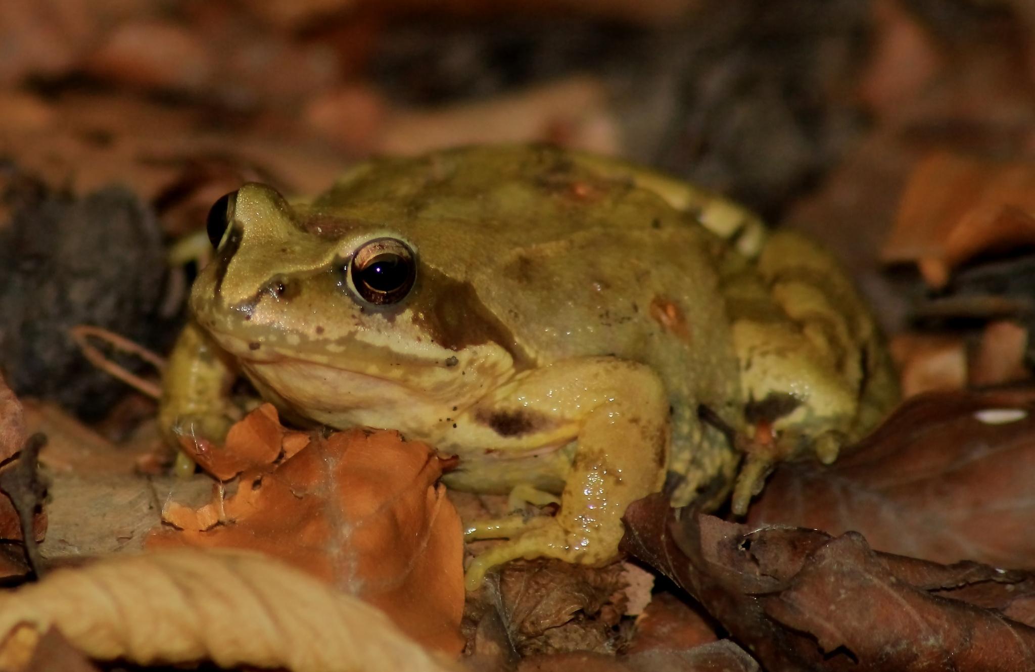 Frog by RAFAŁ BABIARZ