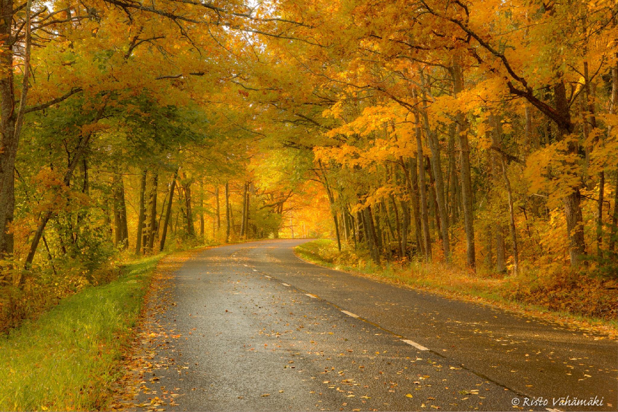 Autumn Road by Risto Vähämäki