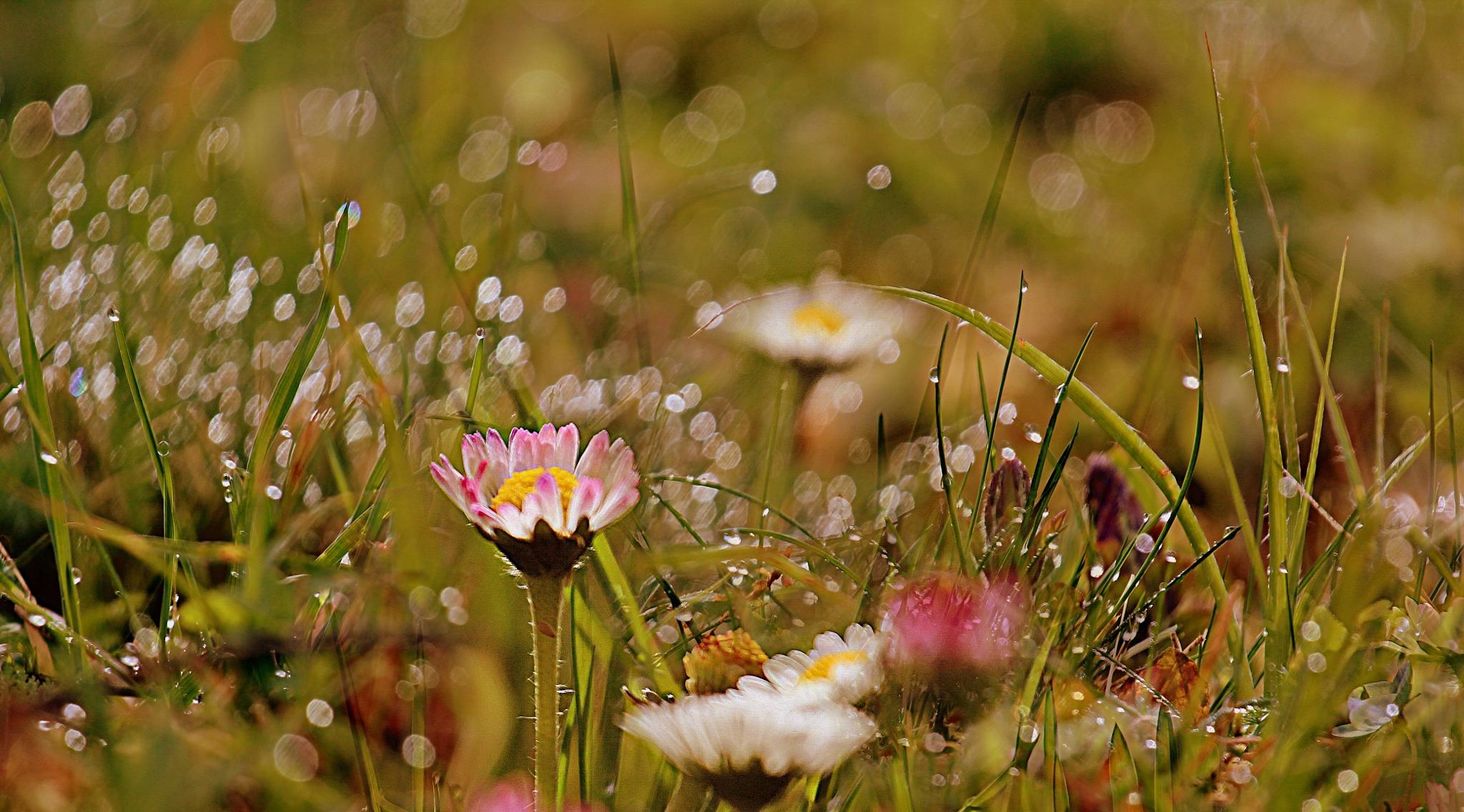 Photo in Random #the diamonds #flowers #dew