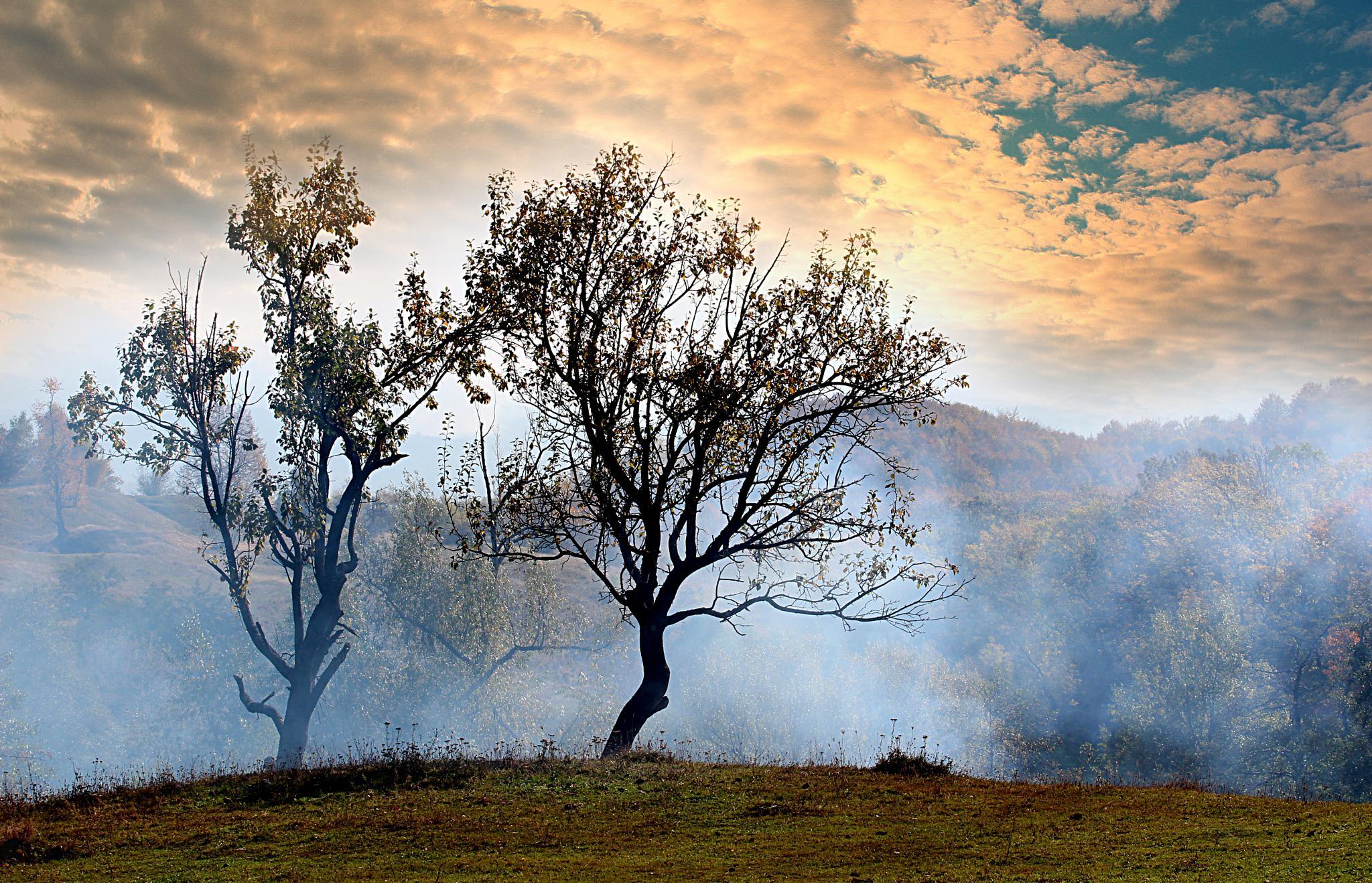 morning mists by Nicoleta