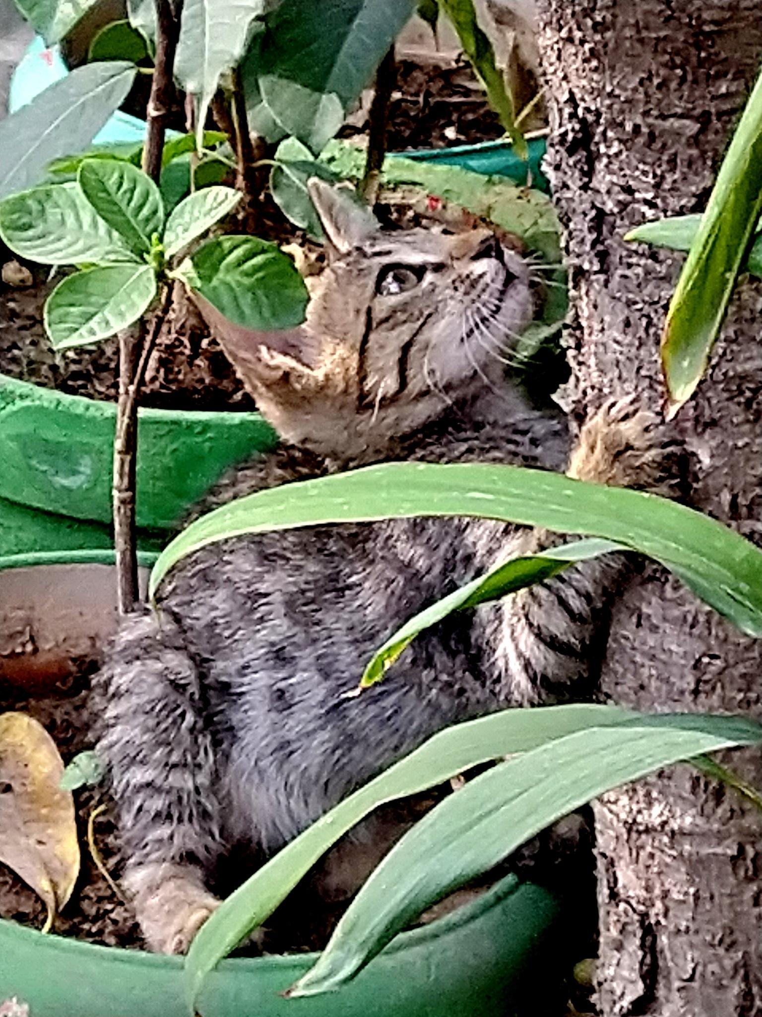 Trying to lift tree by Suresh Tewari