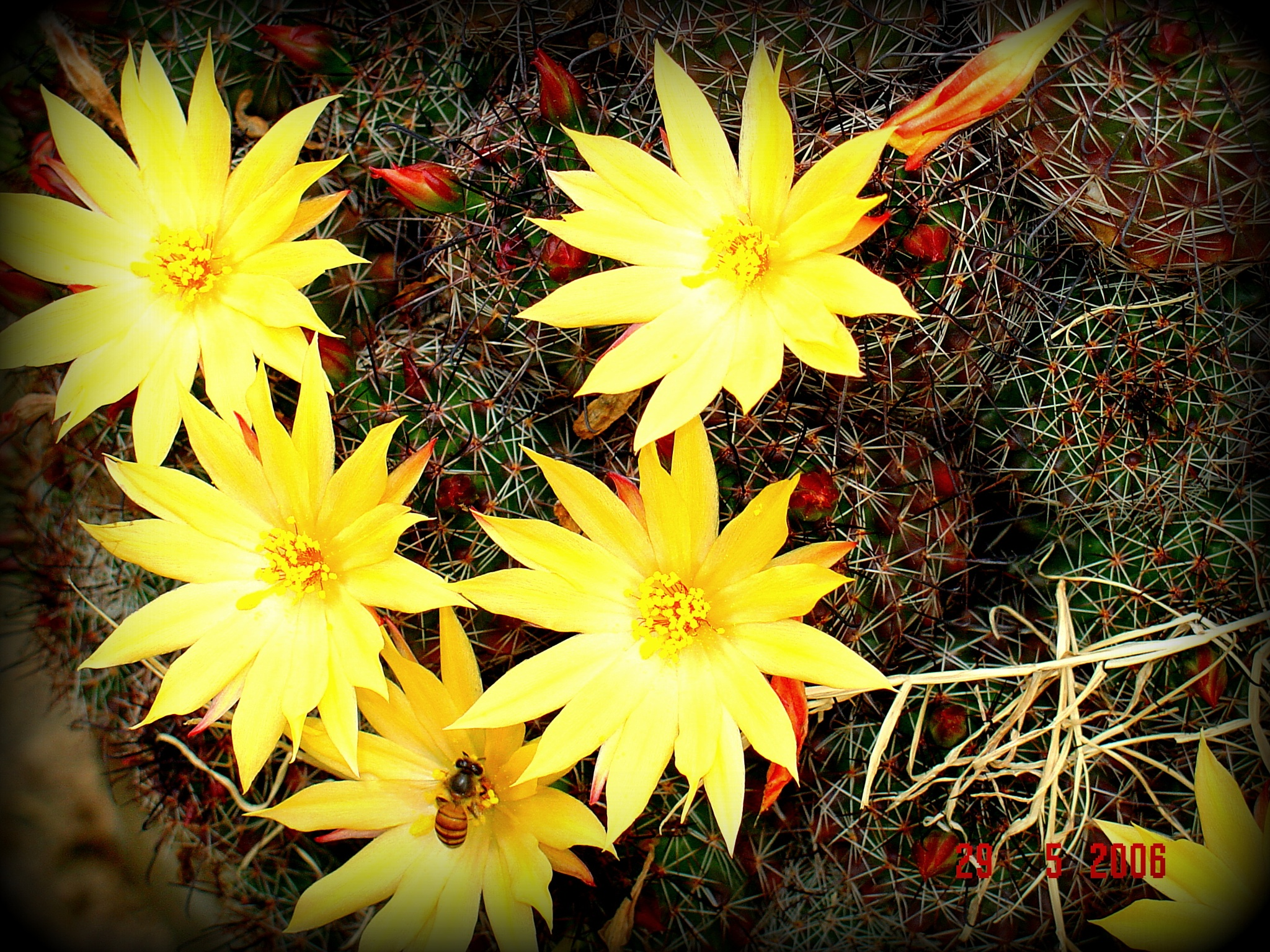 Even Thorns have beauty by Suresh Tewari