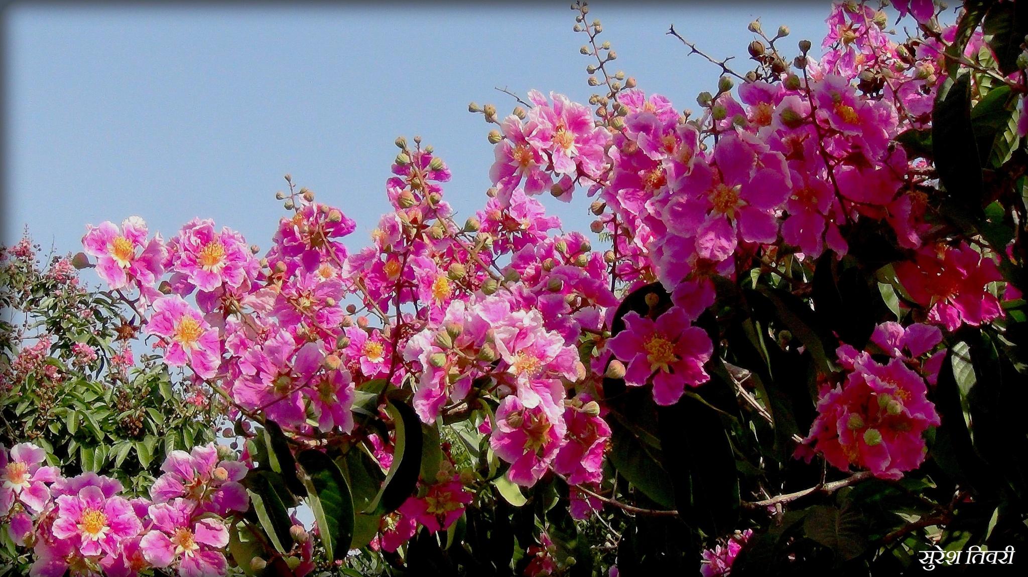 Pretty Flowers by Suresh Tewari