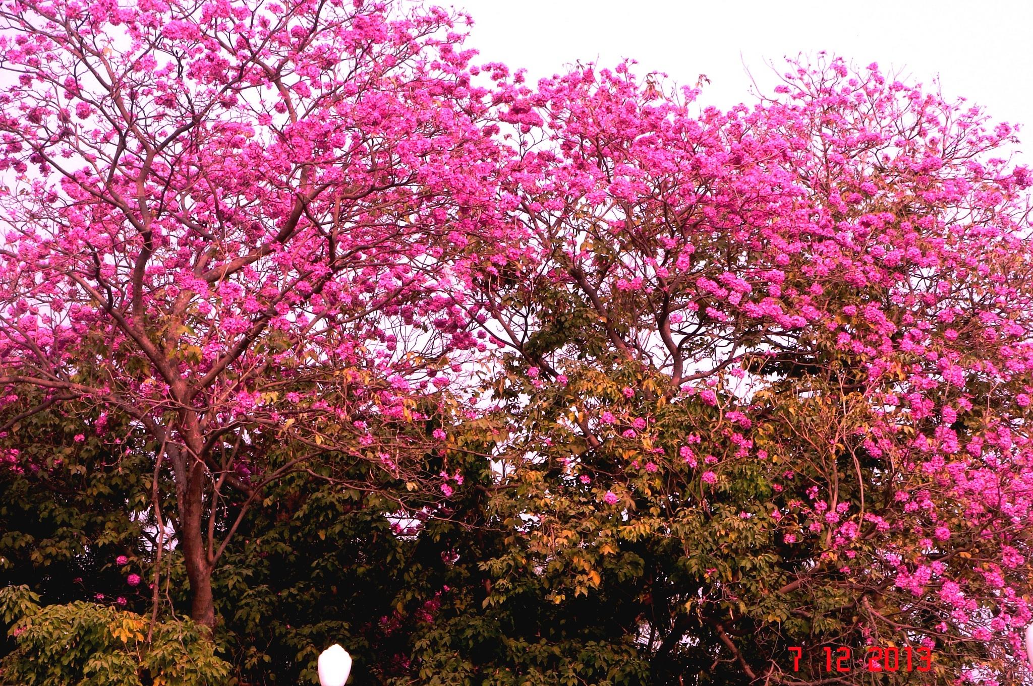 Photo in Nature #red #flowersflowering #treeflowers #are #ever #beautiful