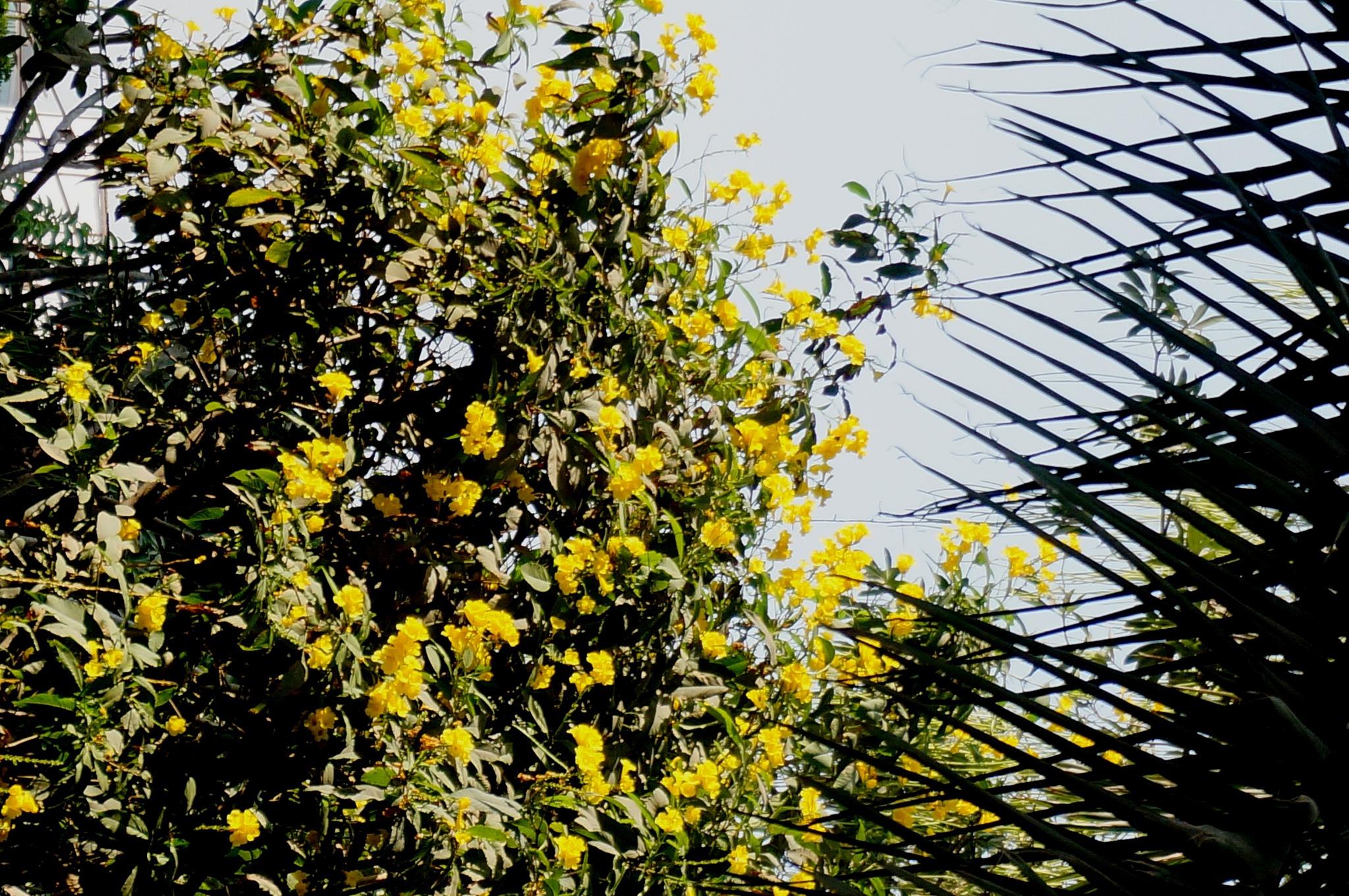 Flower in front of spears by Suresh Tewari