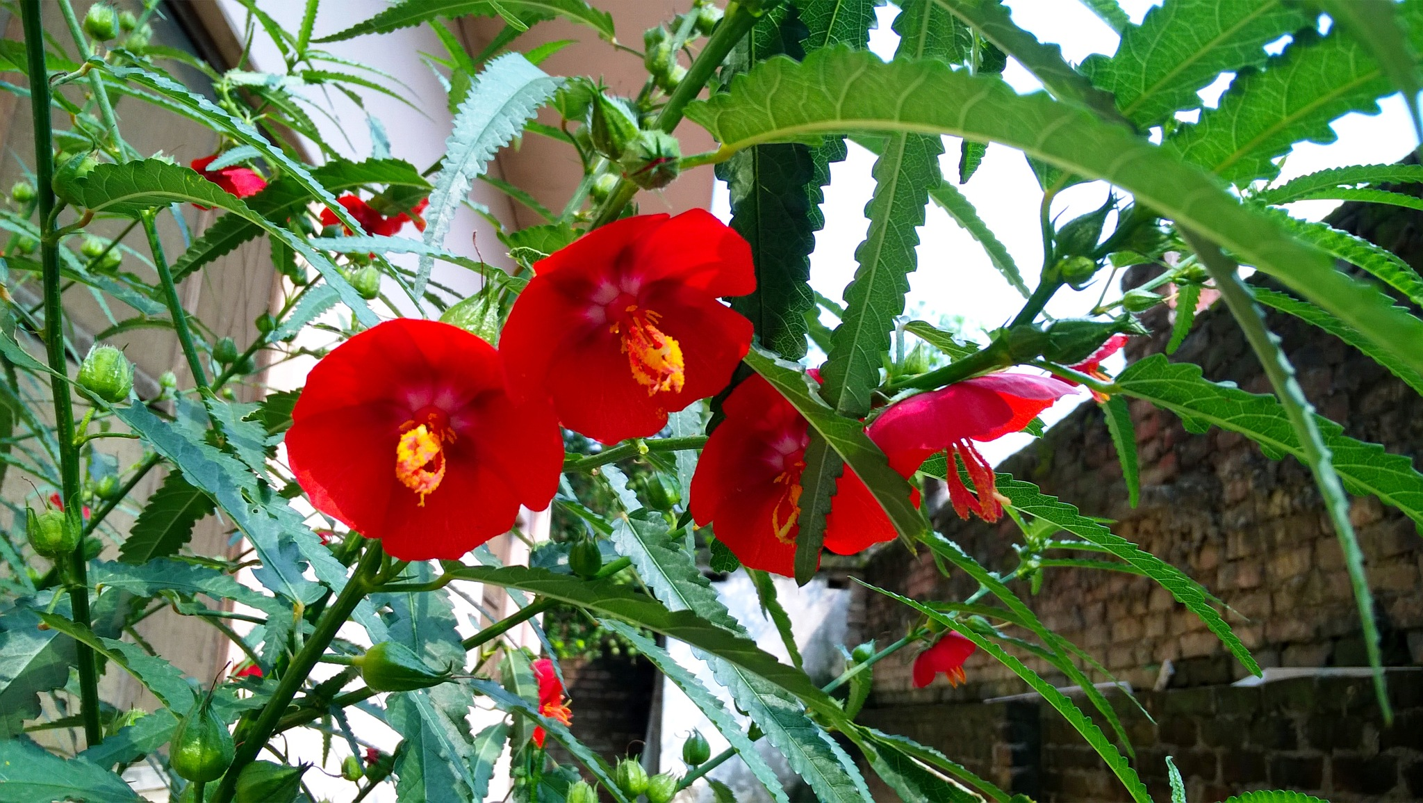 Flowers around us by Suresh Tewari