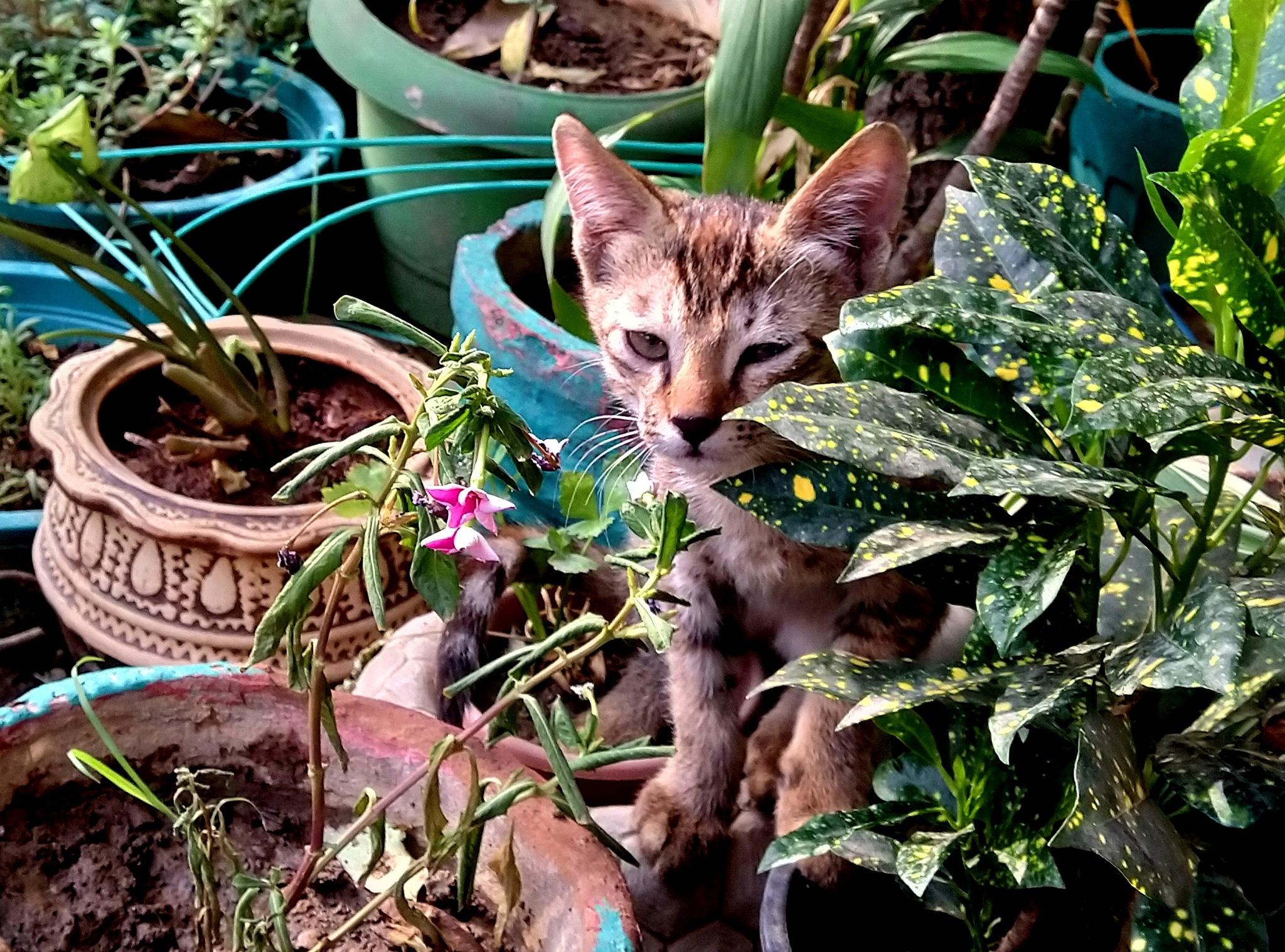 Encounter with Kittens 3 by Suresh Tewari