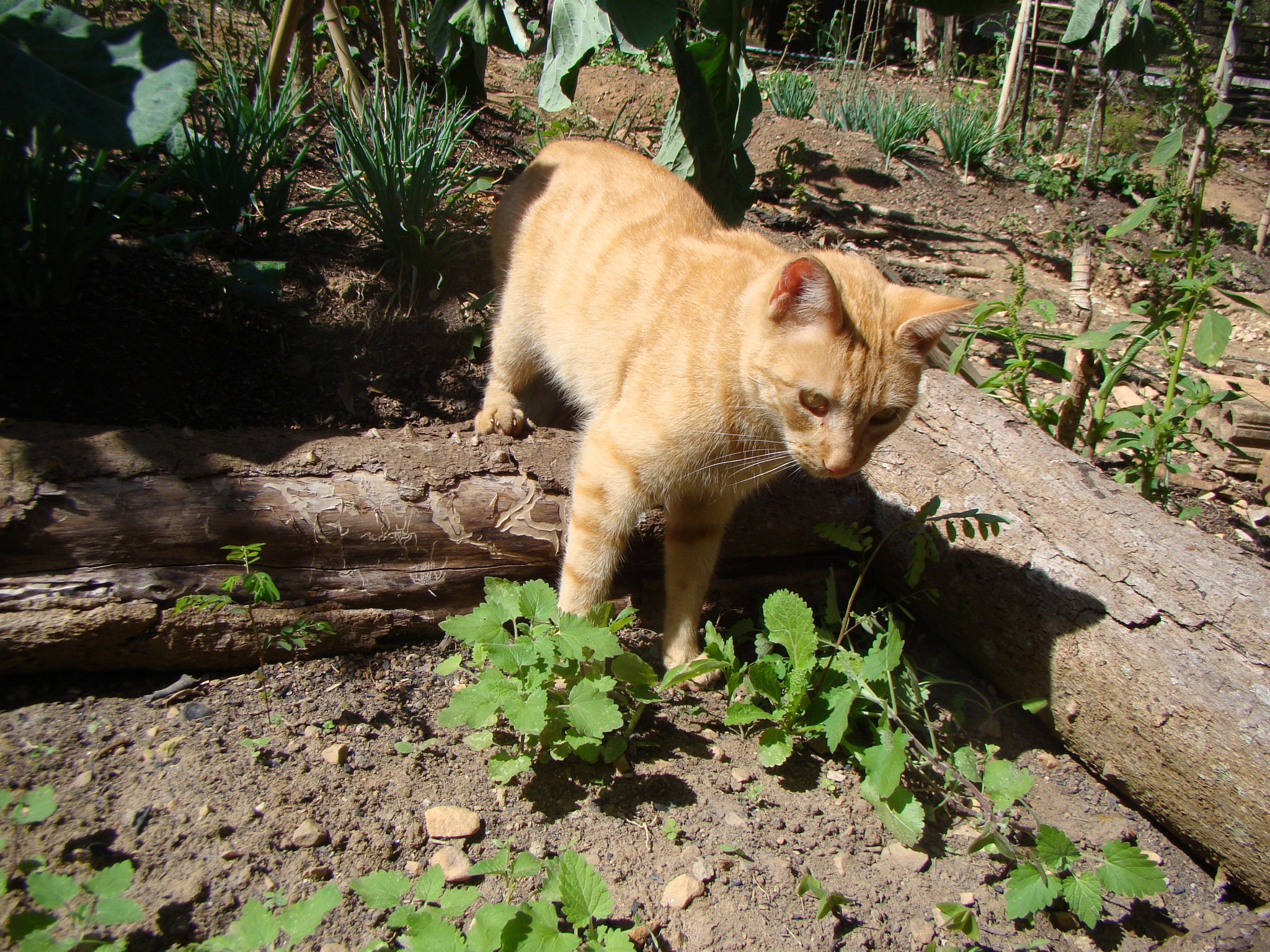 cat by weltoncesarsantos