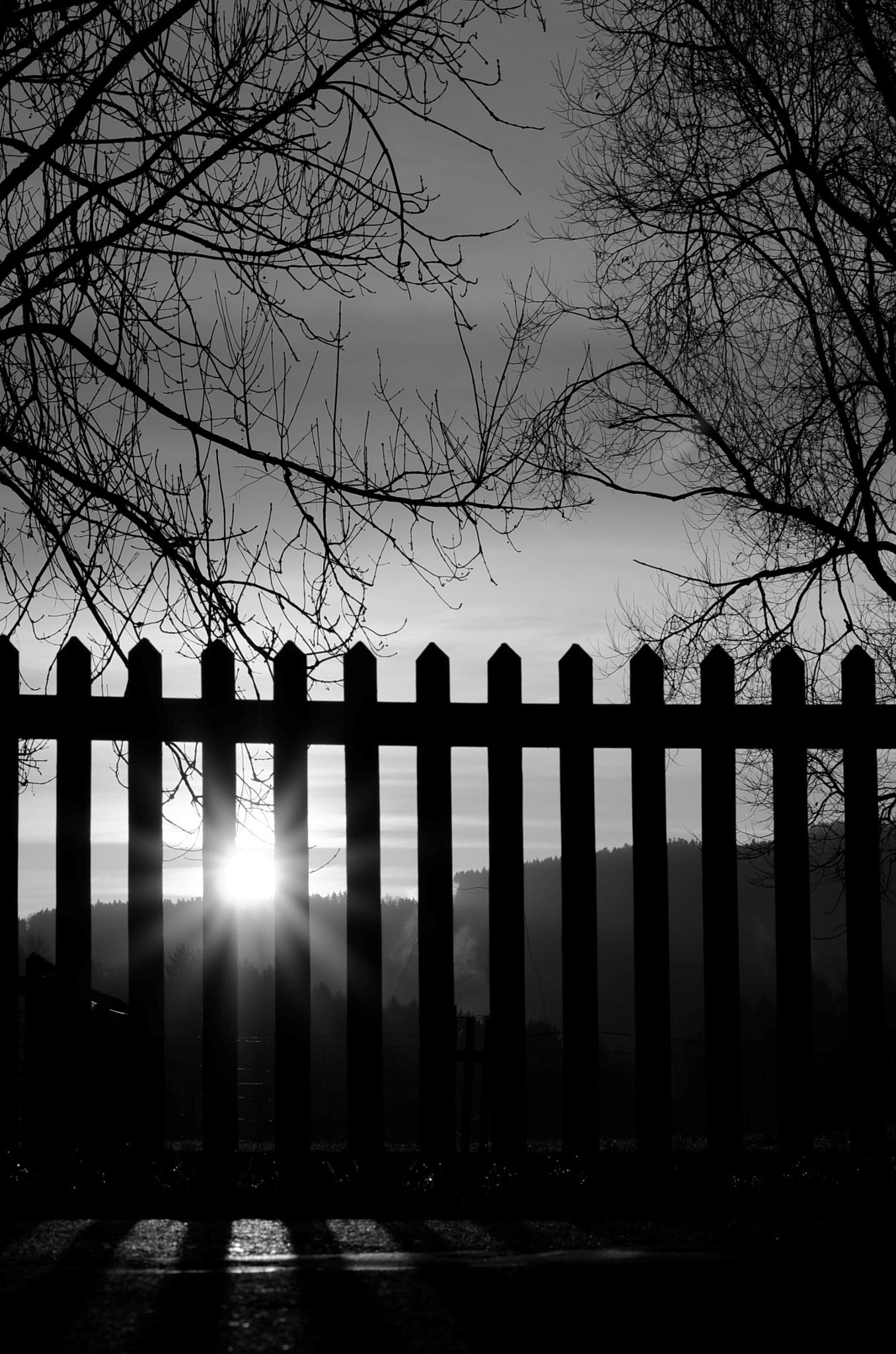sundown by carmen