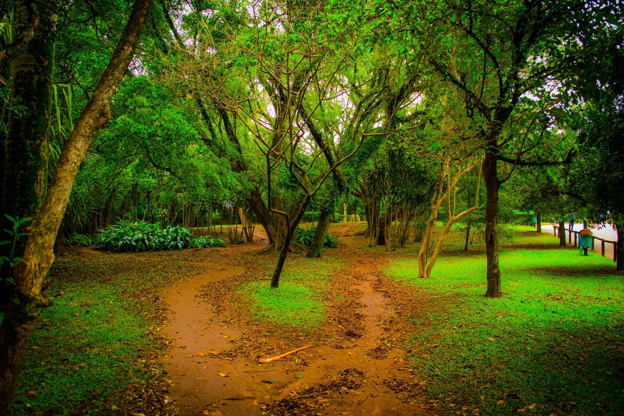 Ibirapuera Path by Salmy Estrela de Lacerda