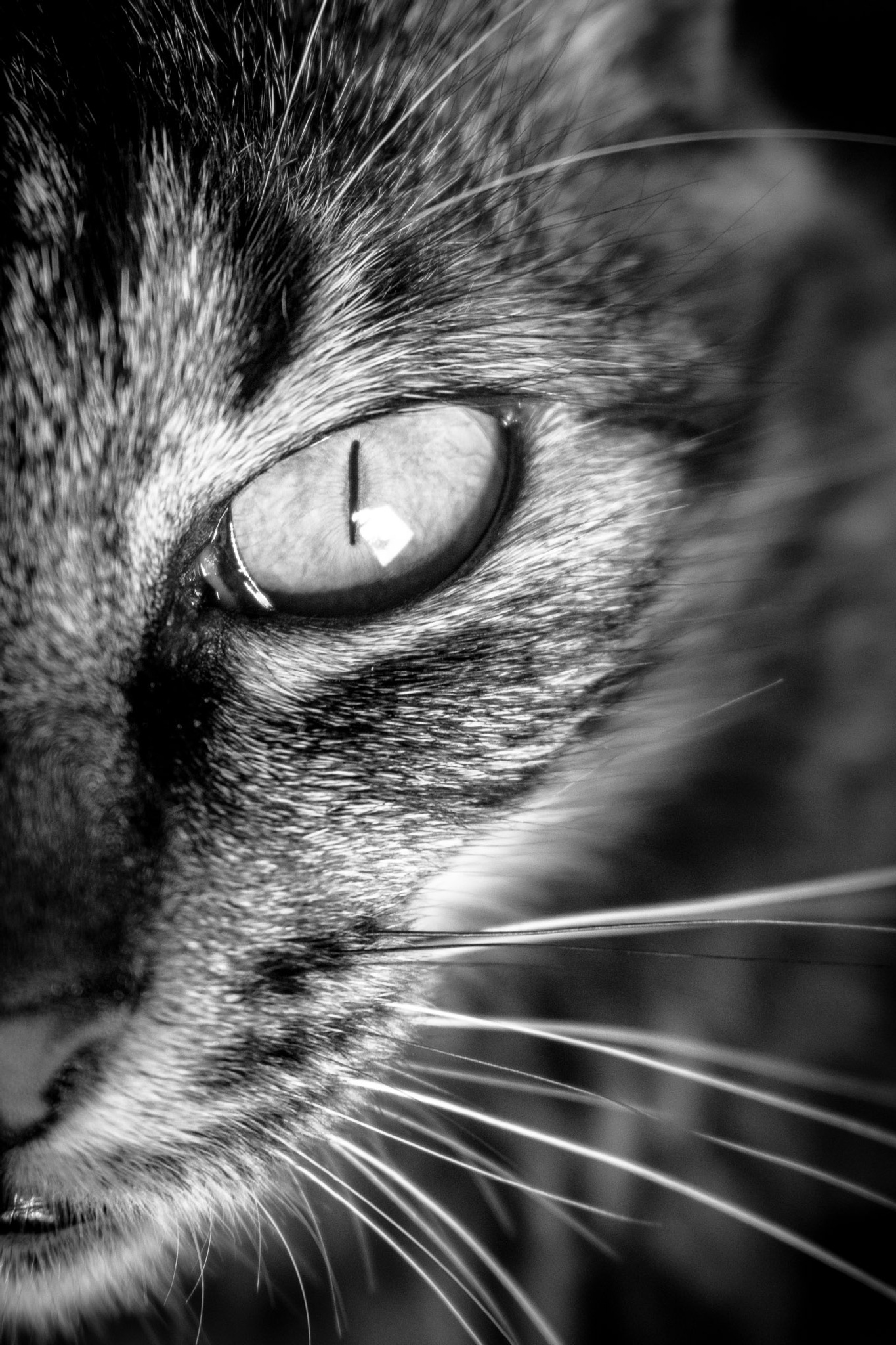Cat Eye by Rodrigo Yassuda
