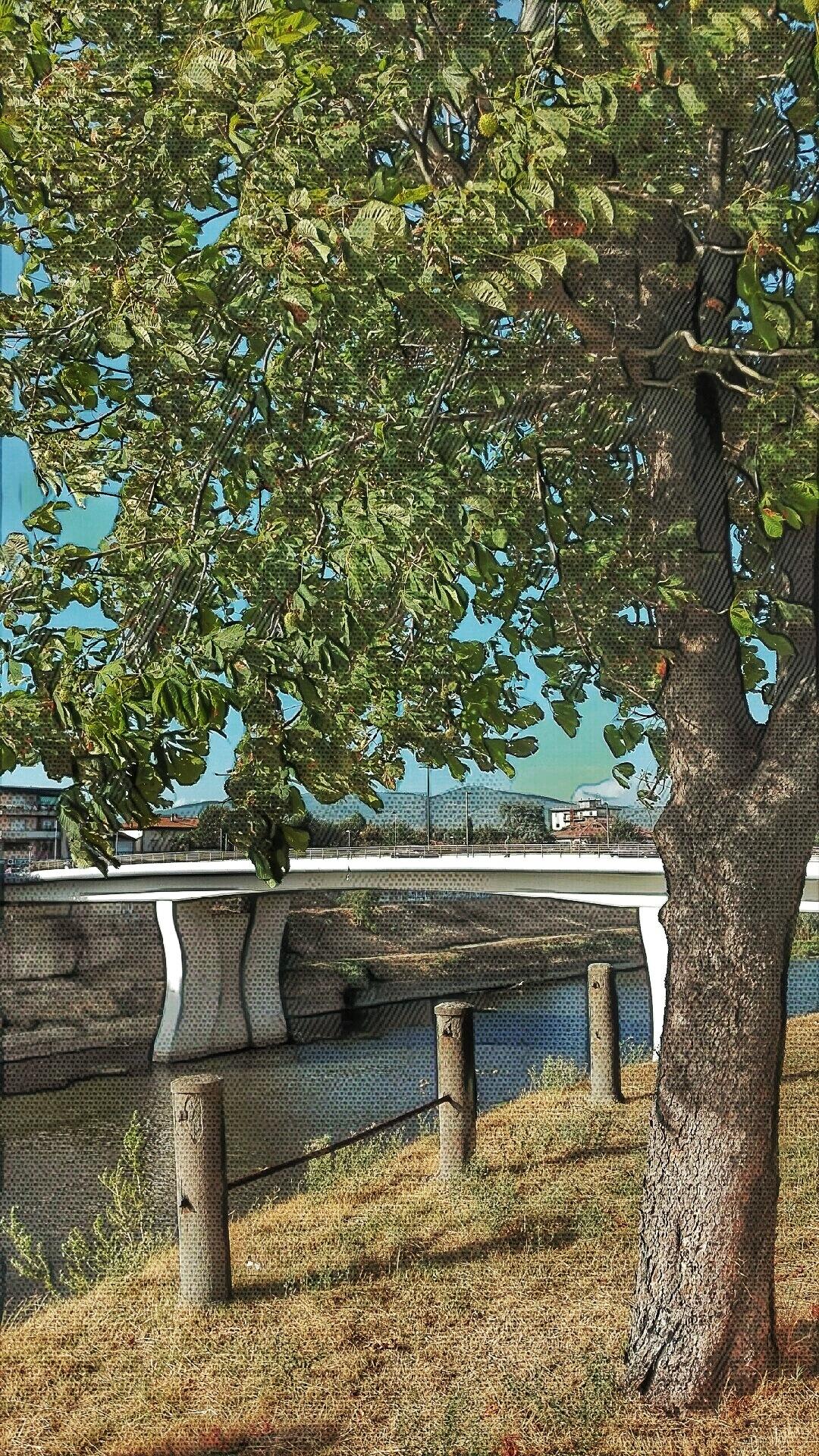 ponte by MOROMORINO