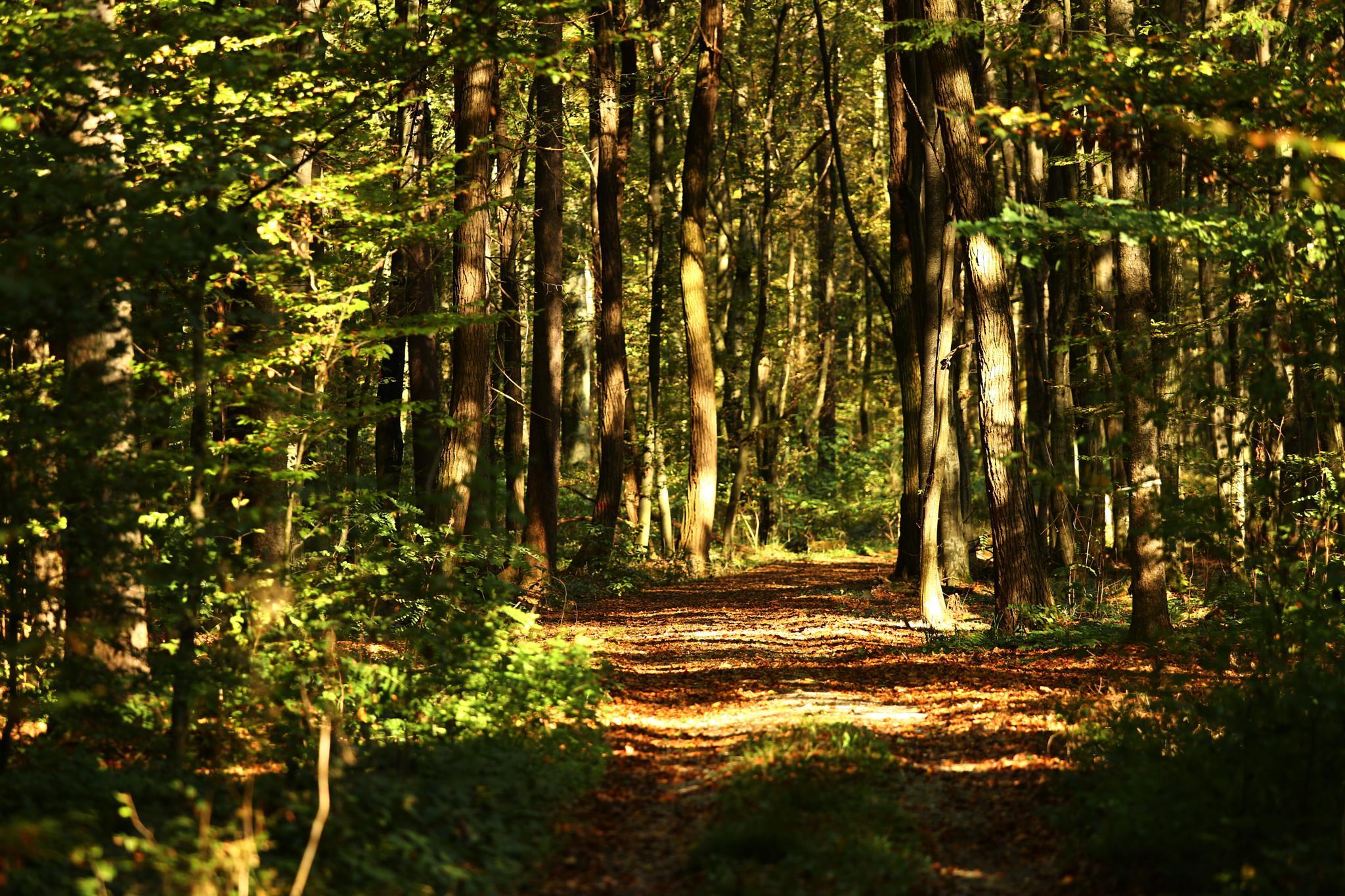 jesen v gozdu by tatjanamijatovi