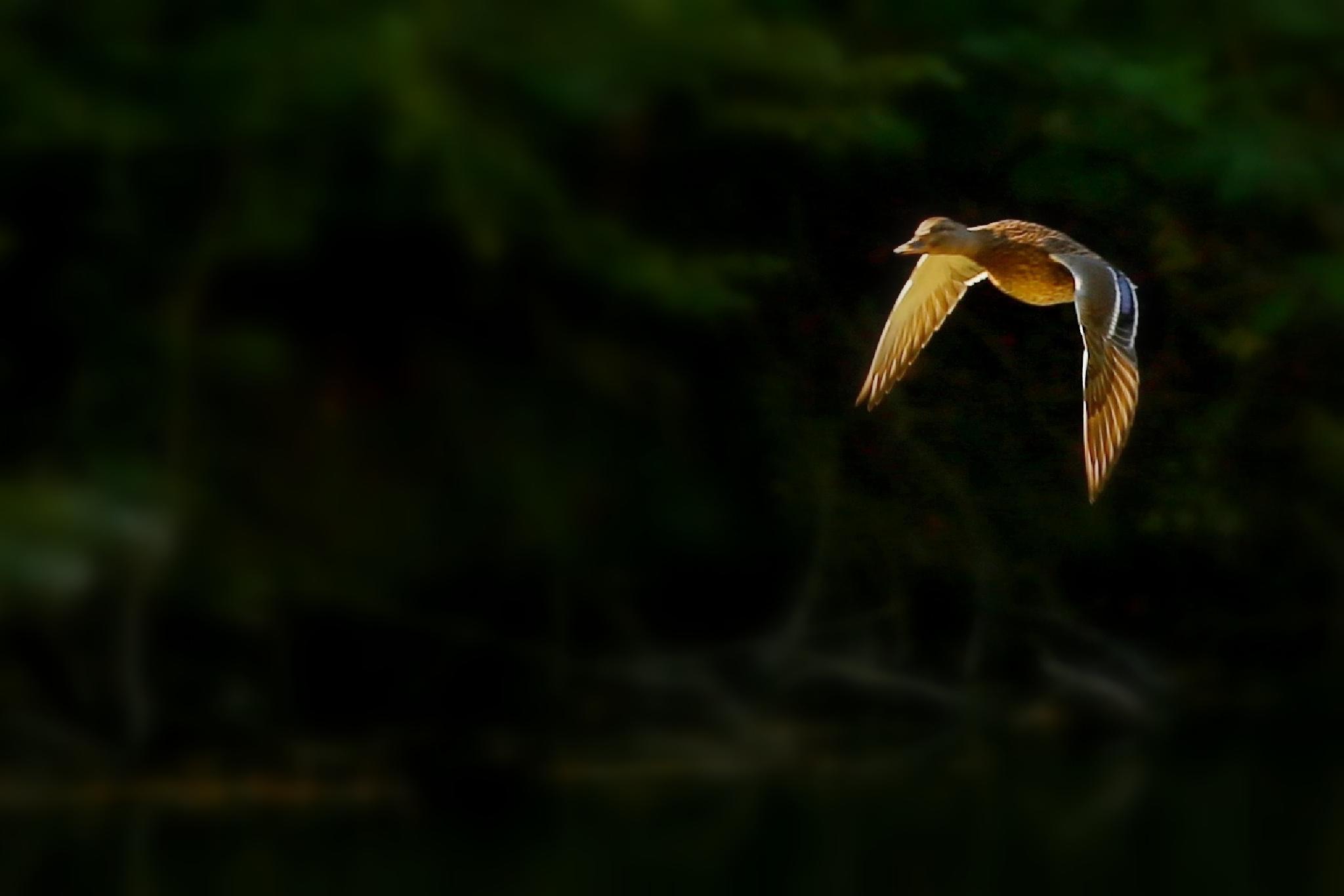 rackofly by tatjanamijatovi