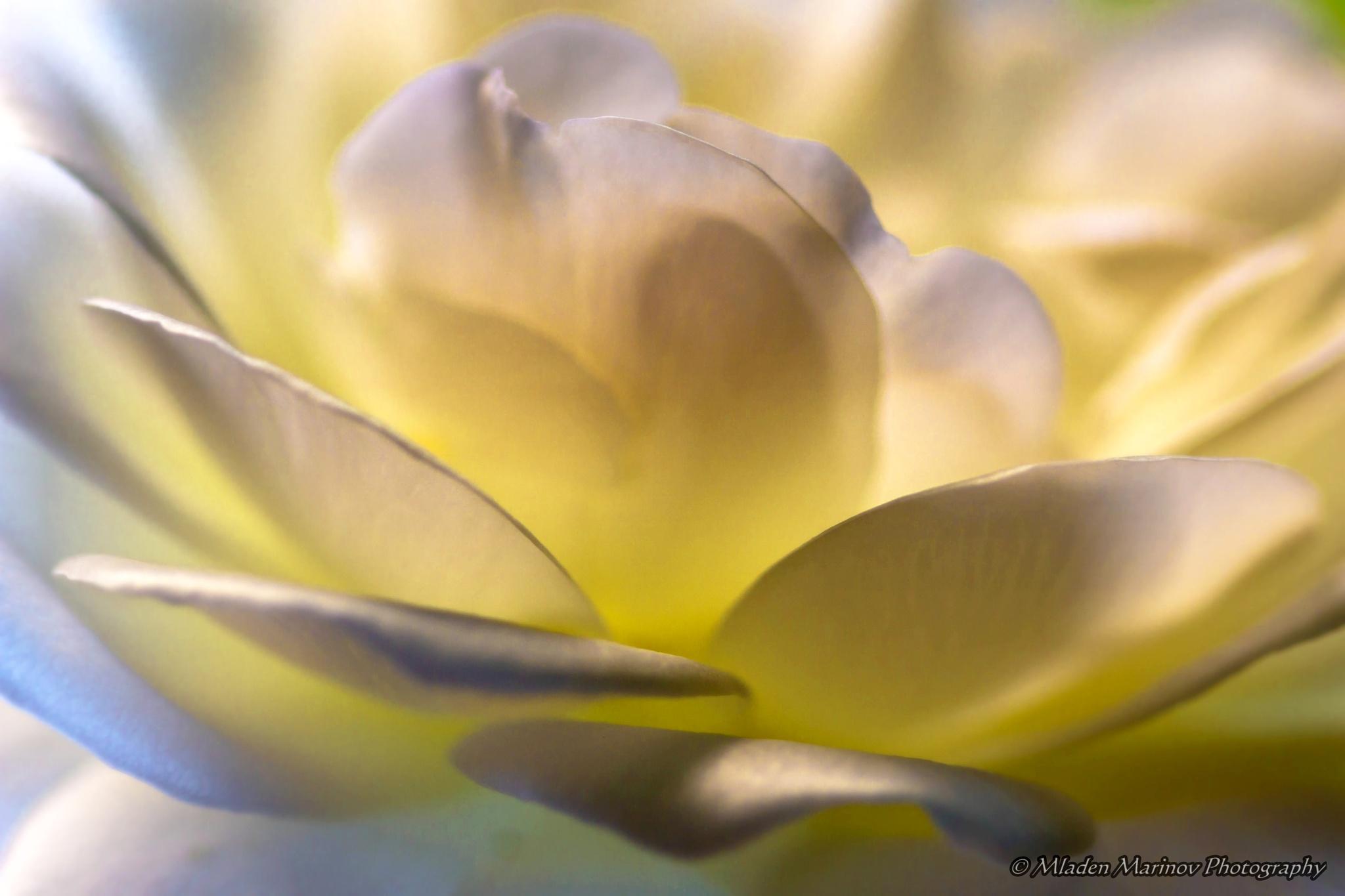 Photo in Macro #nature #macro #leafs