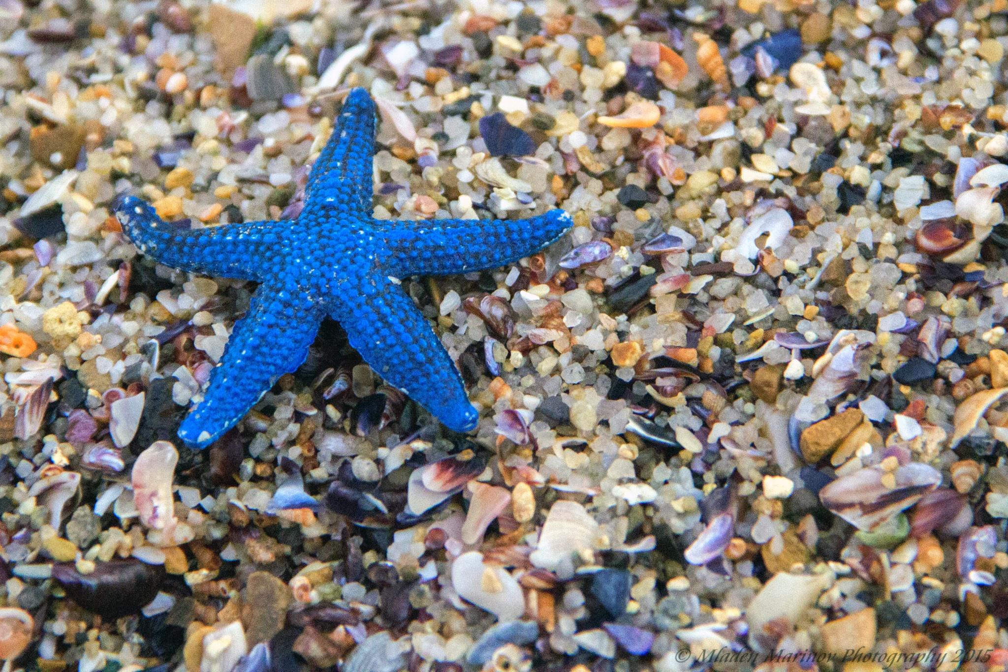 Blue Star by Mladen Marinov (MM)