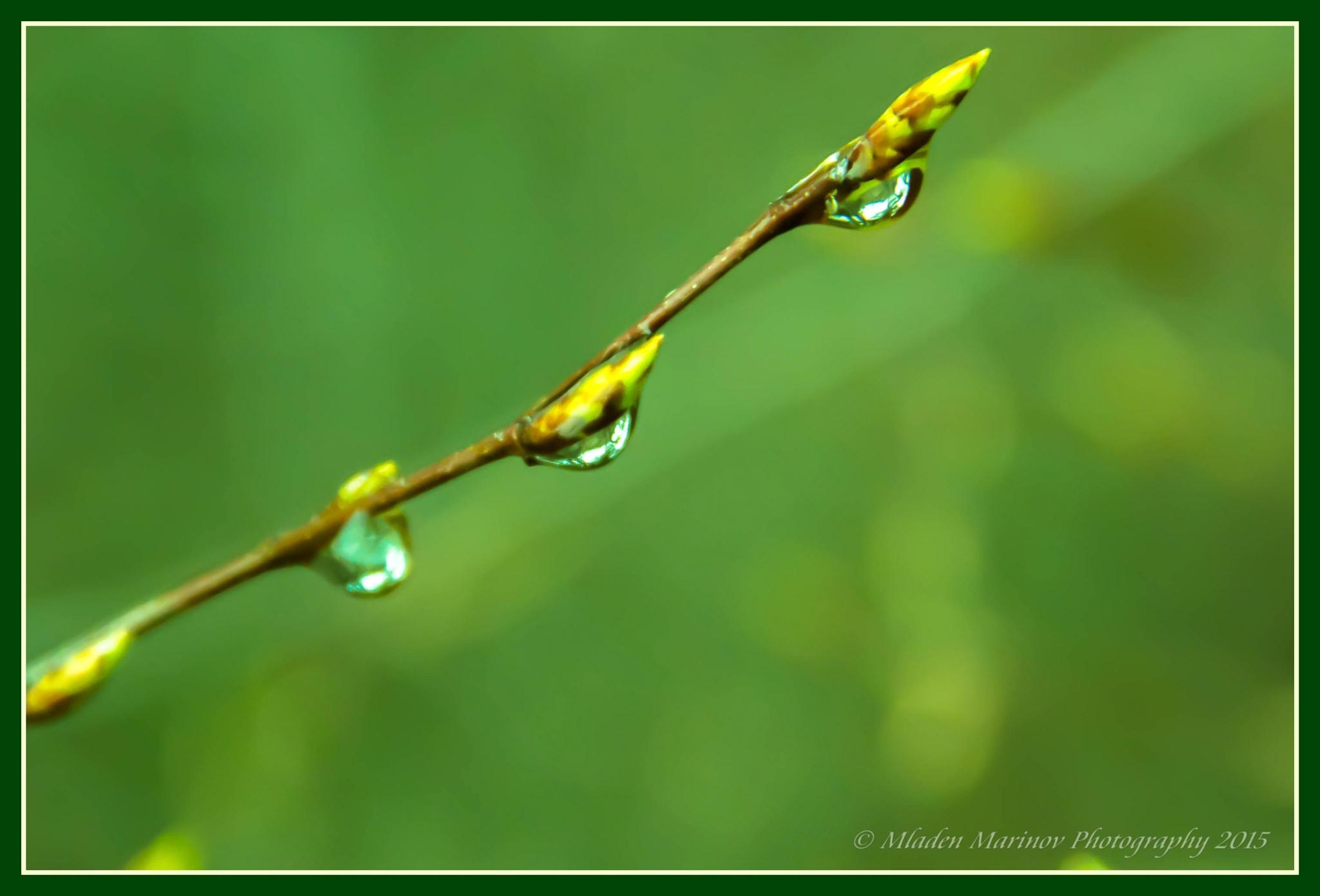 Acid green by Mladen Marinov (MM)