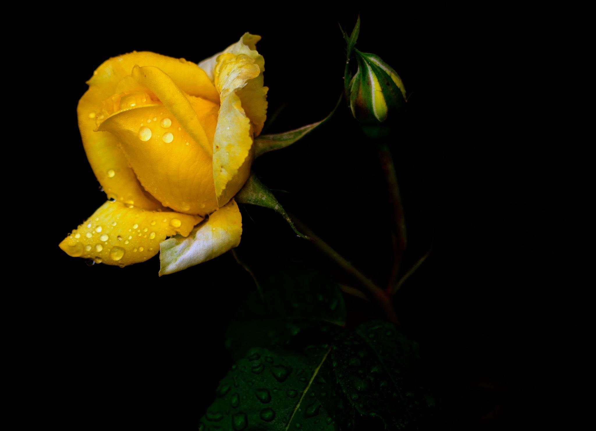 """""""Gentleness under the rain"""" by Mladen Marinov (MM)"""