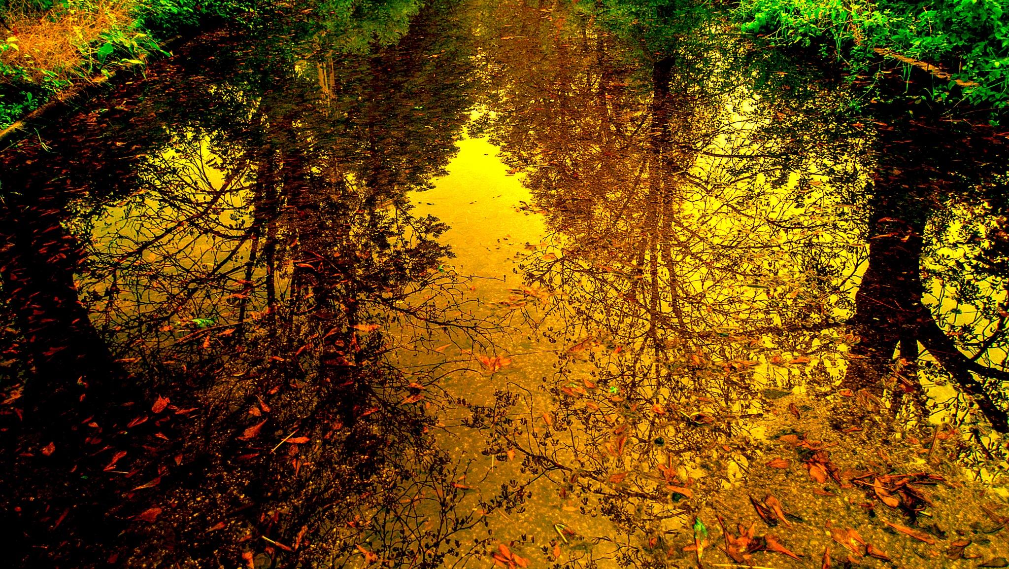 """After the rain"" by Mladen Marinov (MM)"