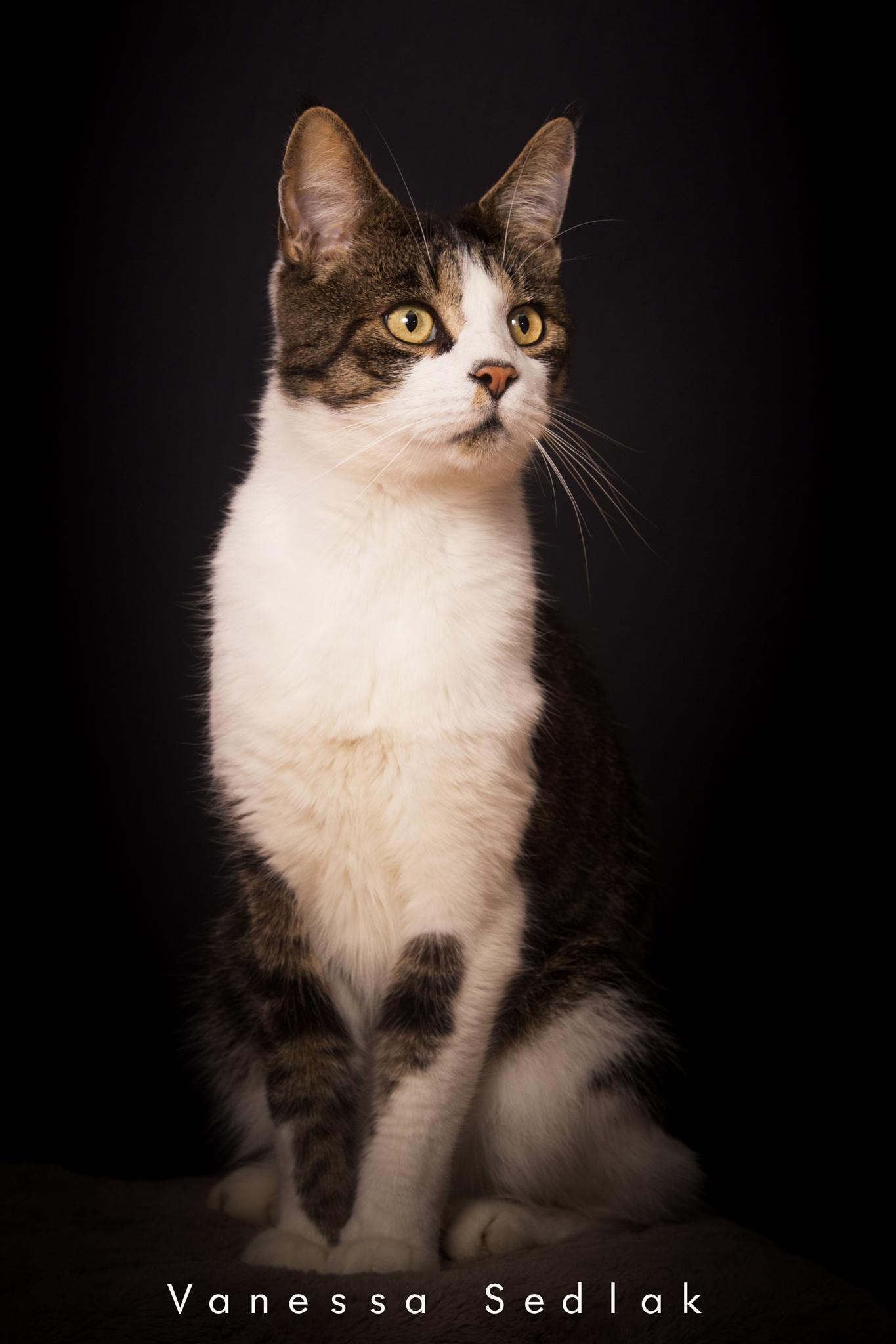 Cat by Vanessa Sedlak