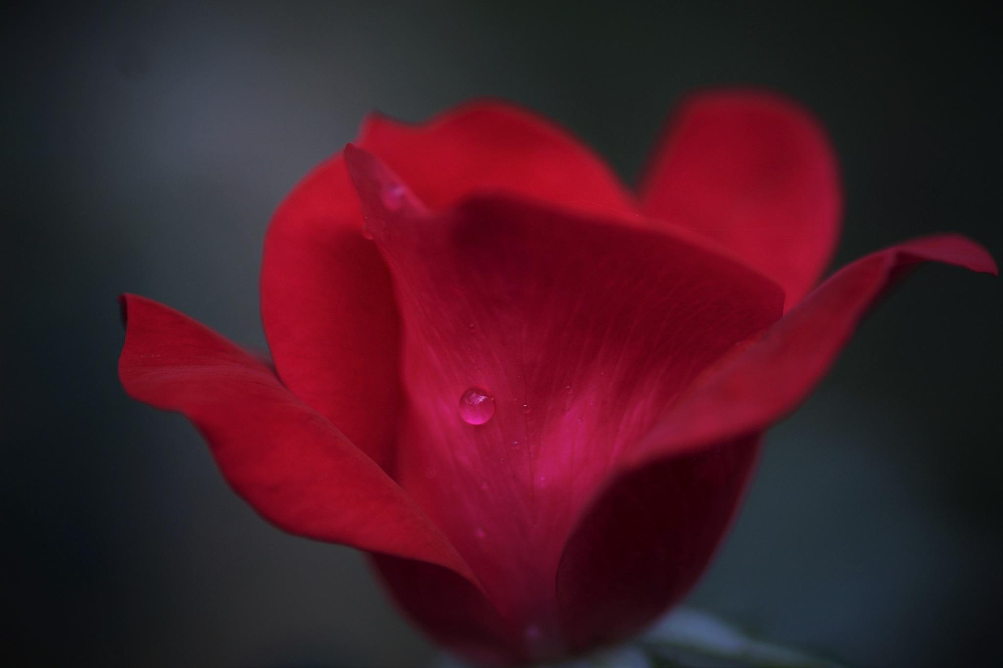 Dew drop by peterjohn