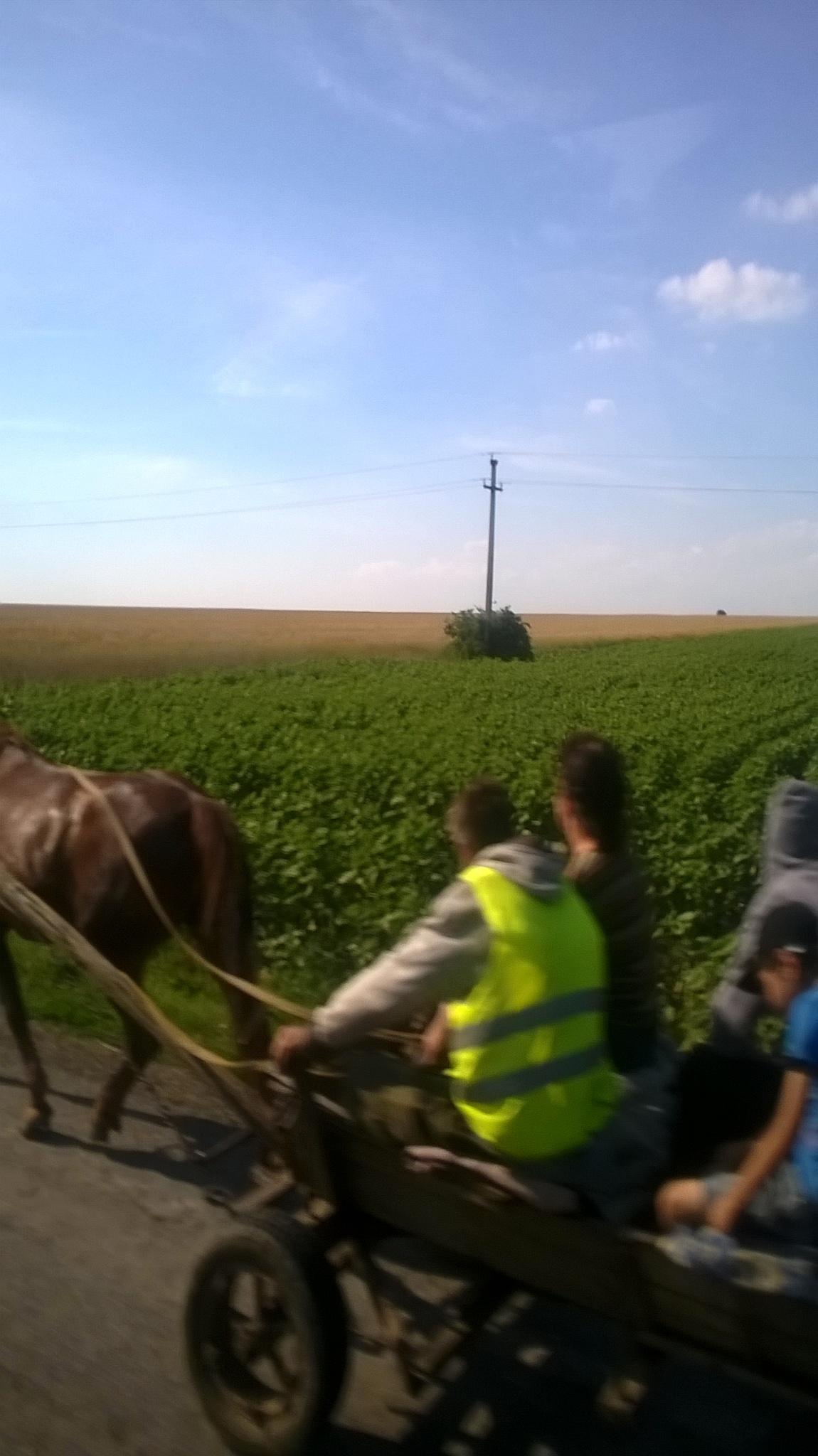 hahaha...ride by horse and cart by Ioana Dumitriu