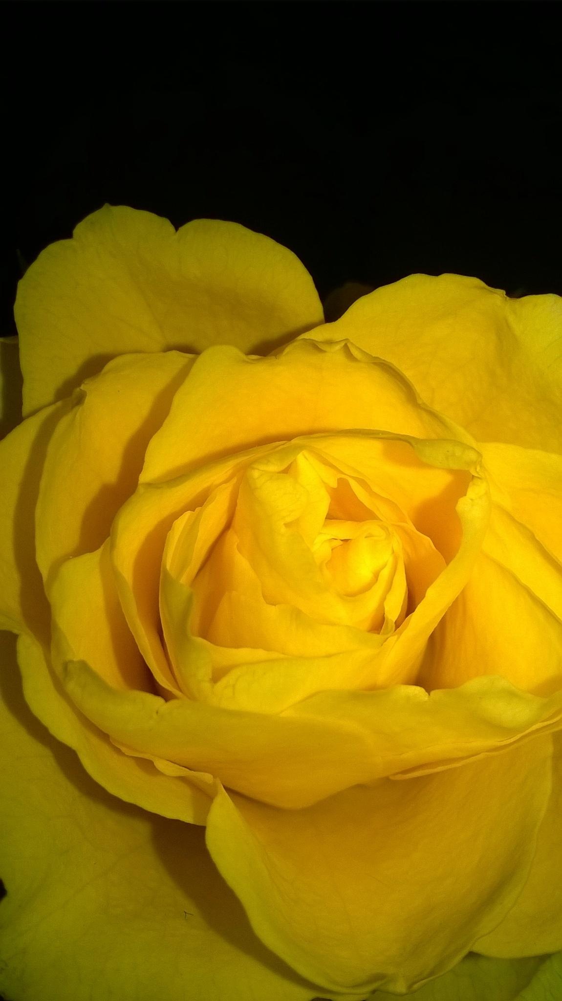 lovely yellow by Ioana Dumitriu