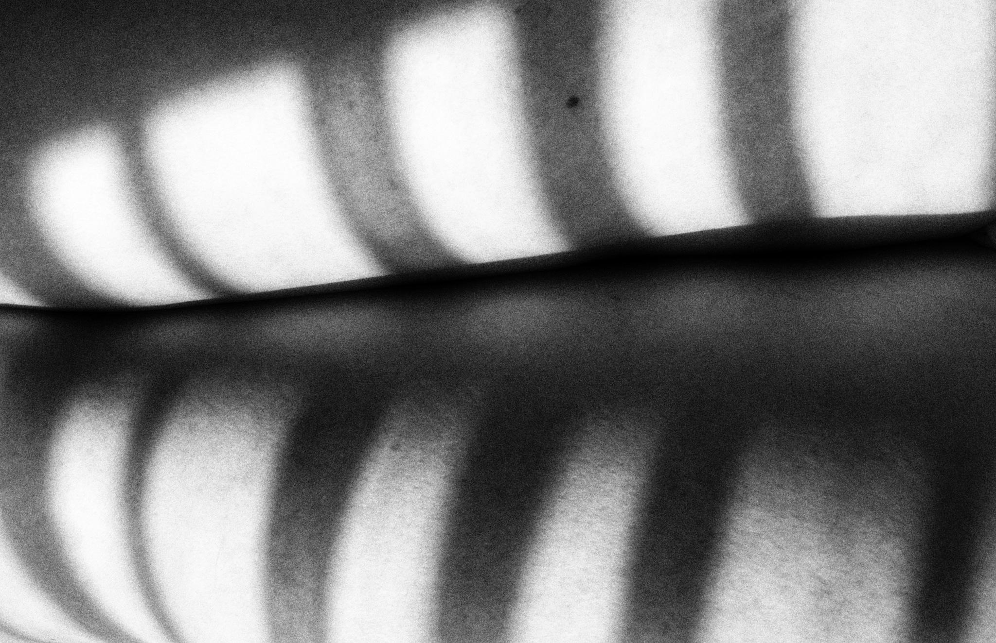 shadowselfie  by nesringungorkaratas