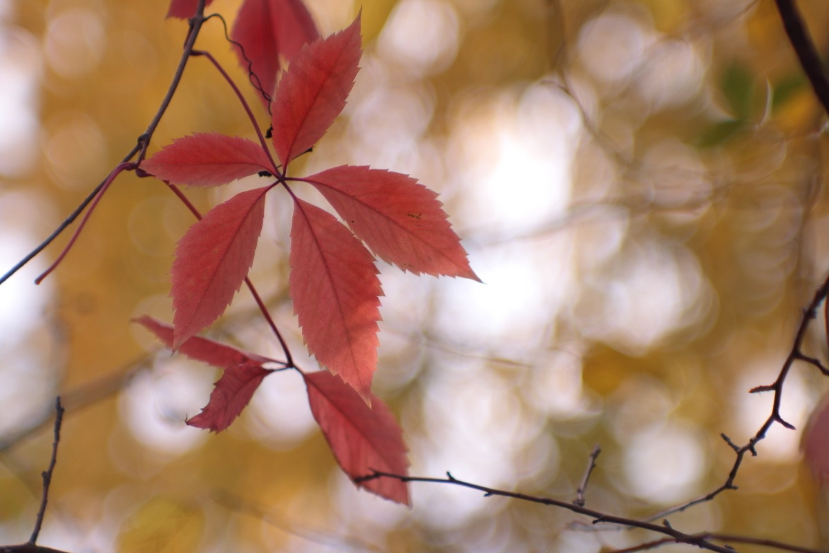 autumn colors by Alexey Komarov
