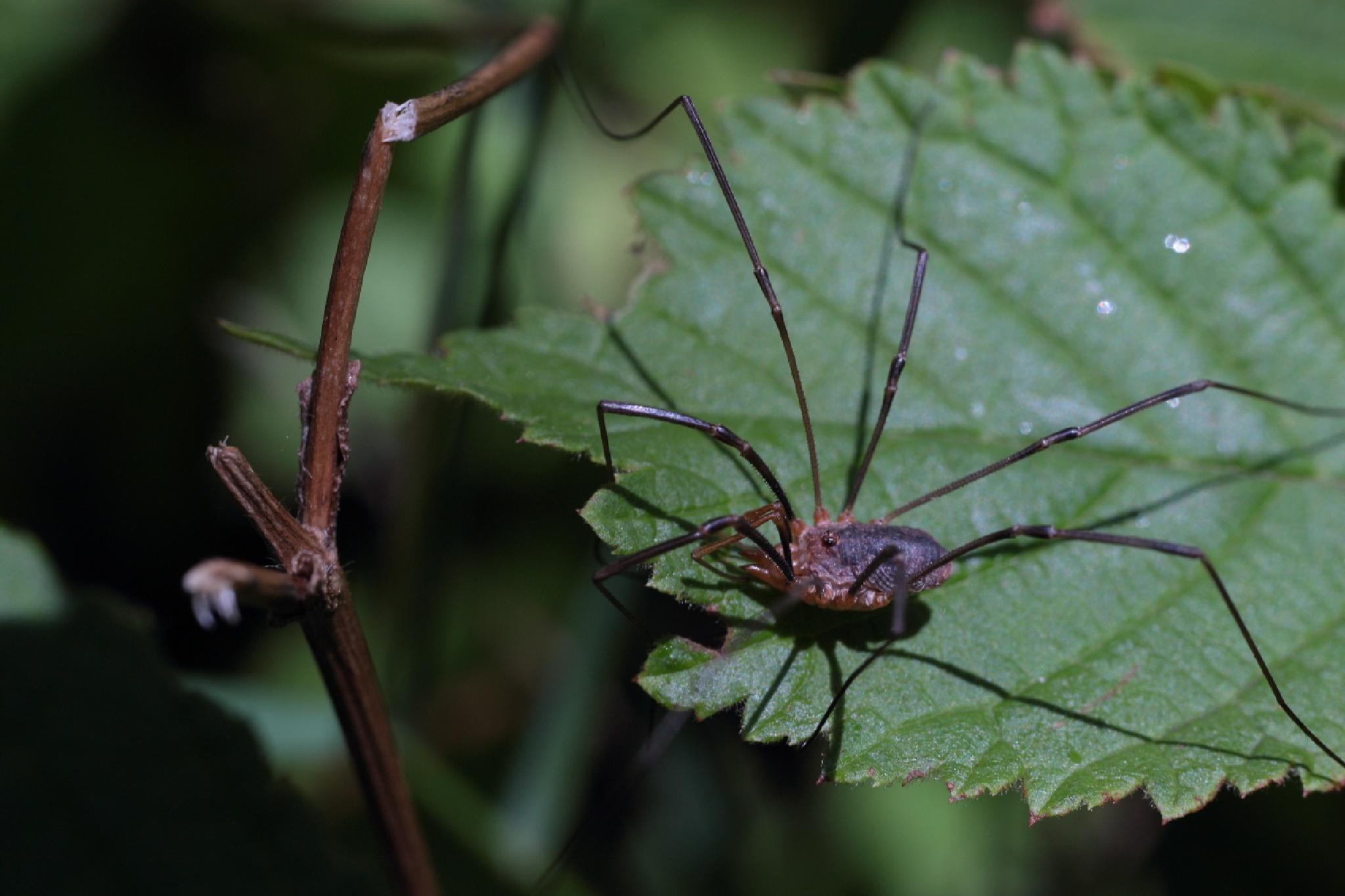 spider by Alexey Komarov