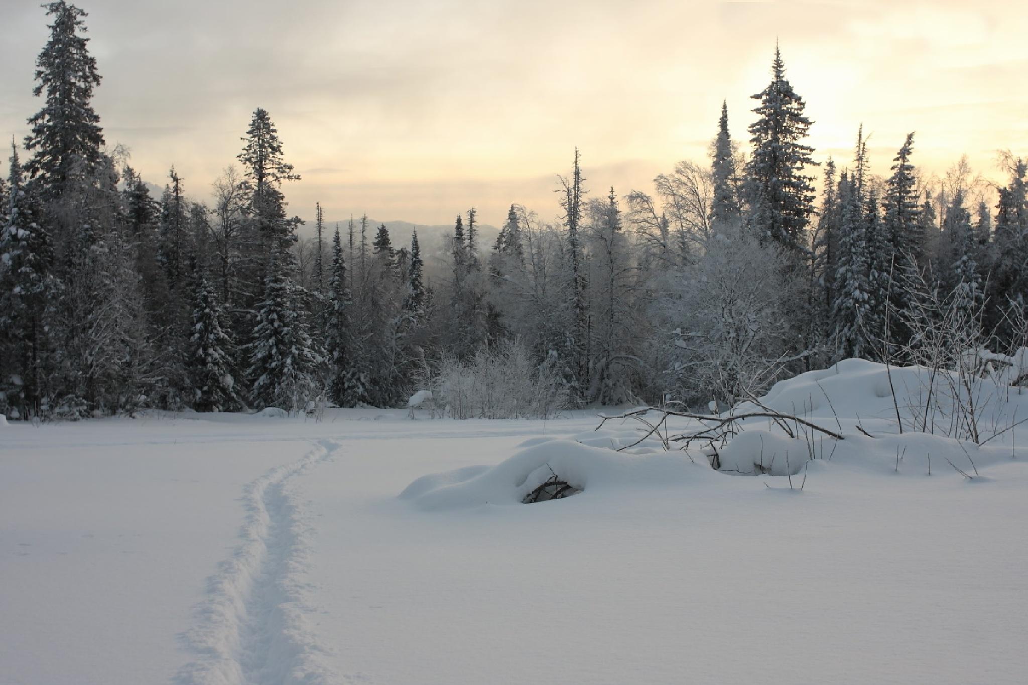 path in forest by Alexey Komarov